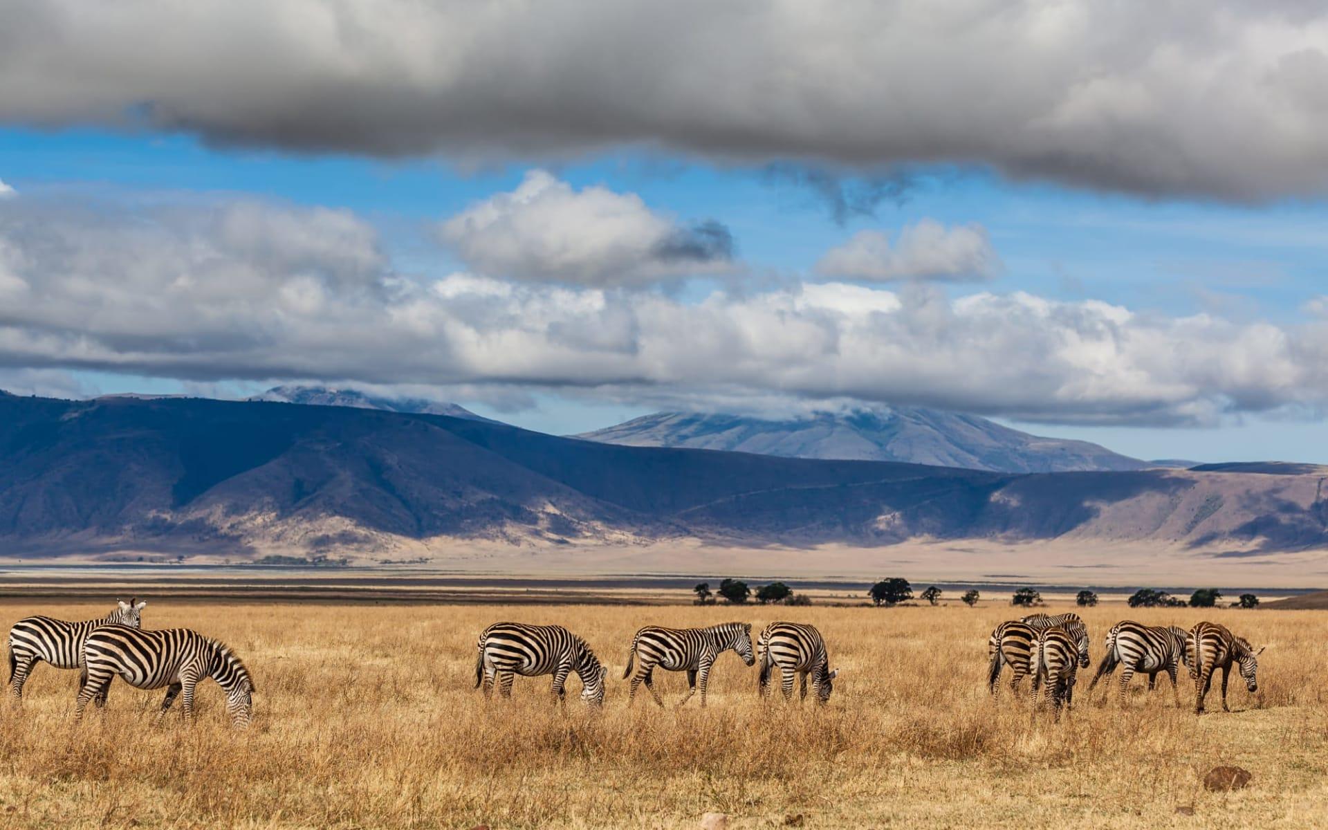 Ngorongoro Hochland Expedition ab Arusha: Zebra