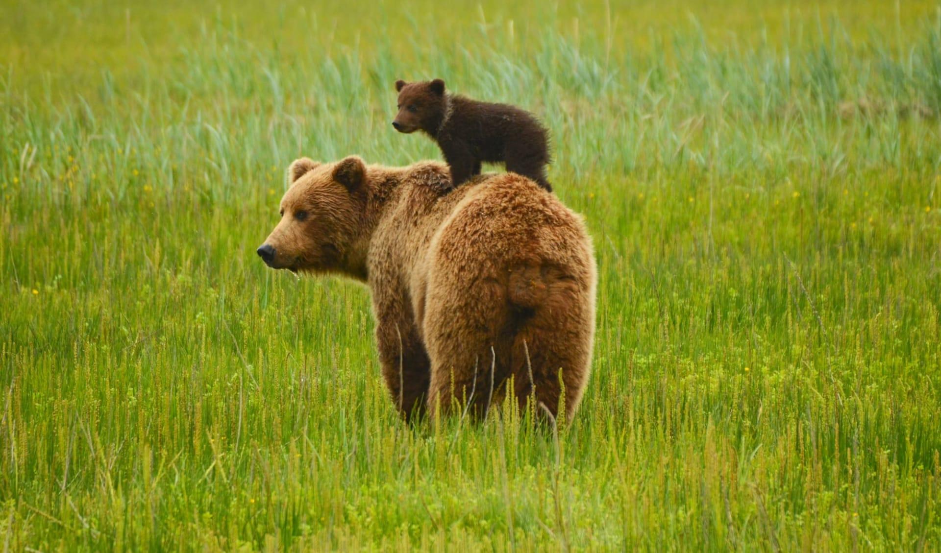 Bärenbeobachtung Spirit Bear Lodge ab Vancouver: