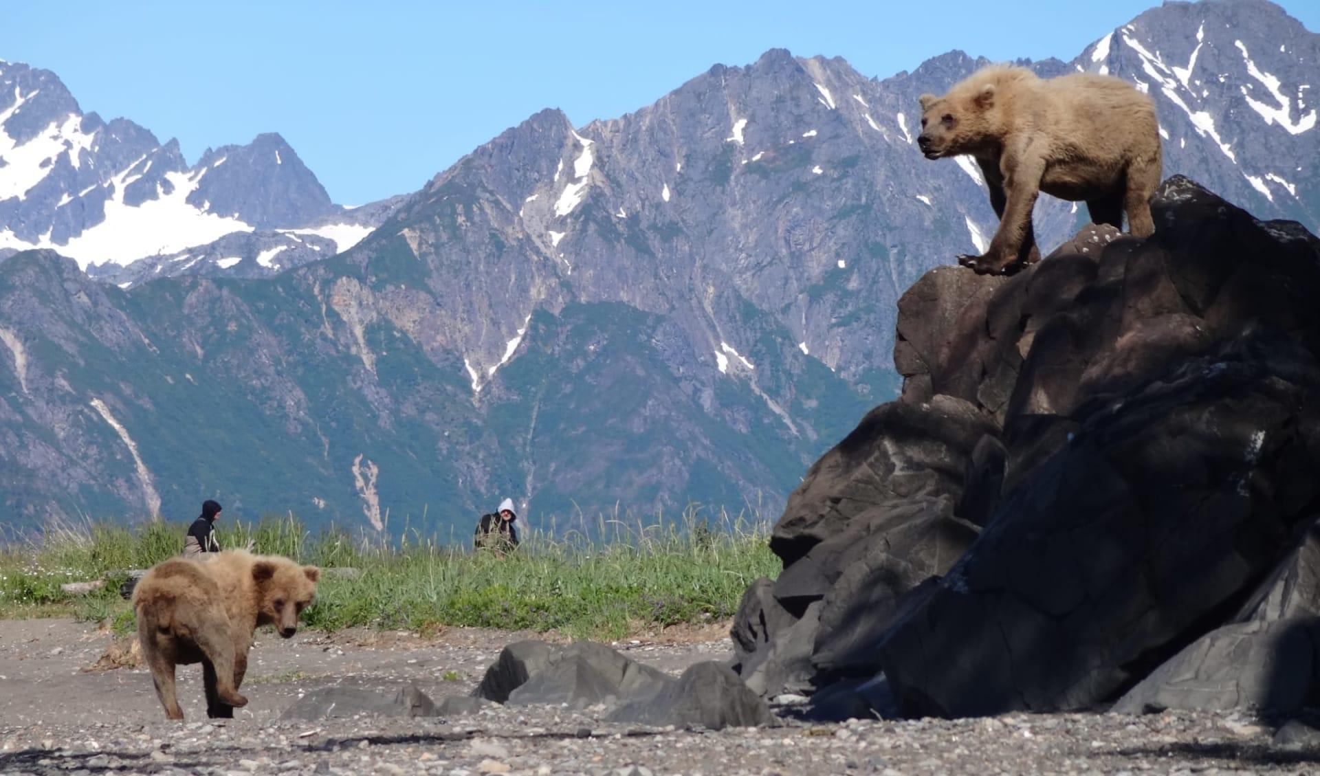 Bärenbeobachtung Great Alaska Bear Camp ab Anchorage: activities: Great Alaska Bear Camp_Bears (4)