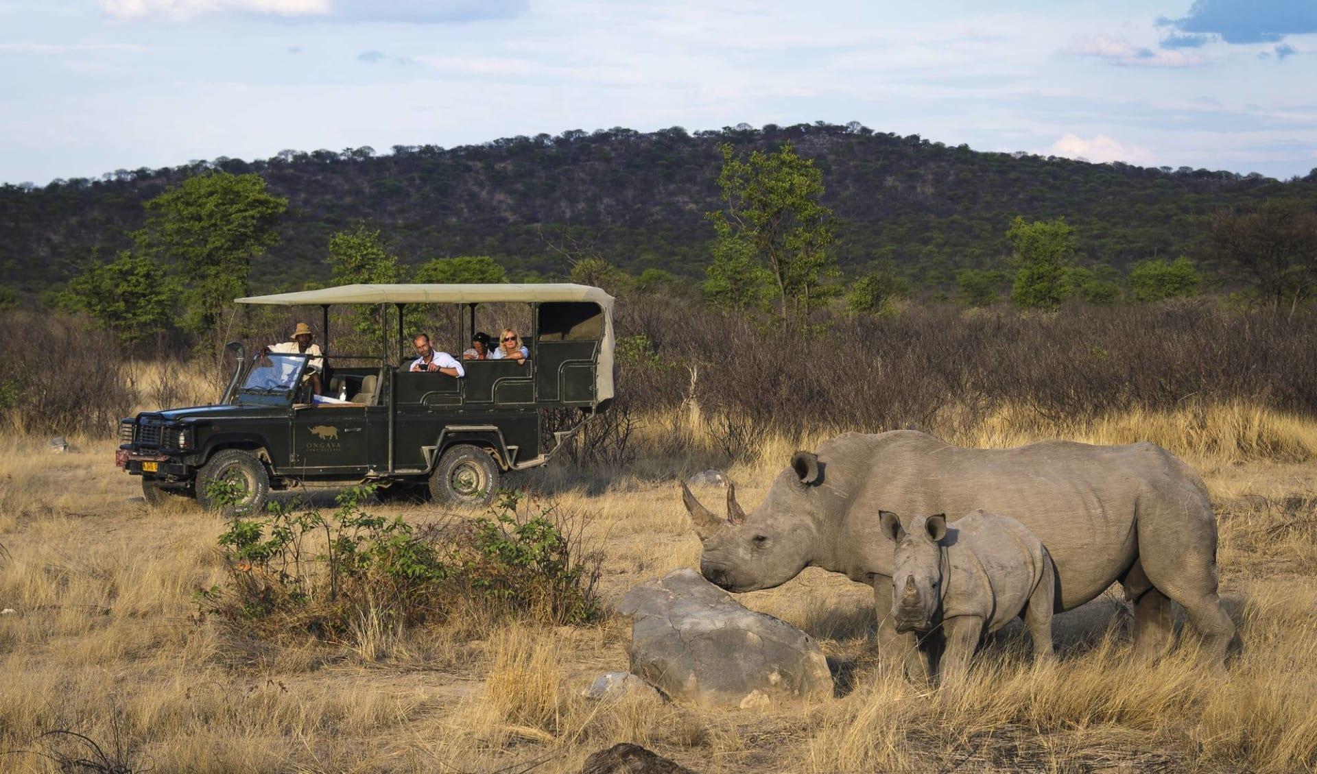 Abenteuer Safari ab Johannesburg: activities: Safarifahrzeug und Nashörner