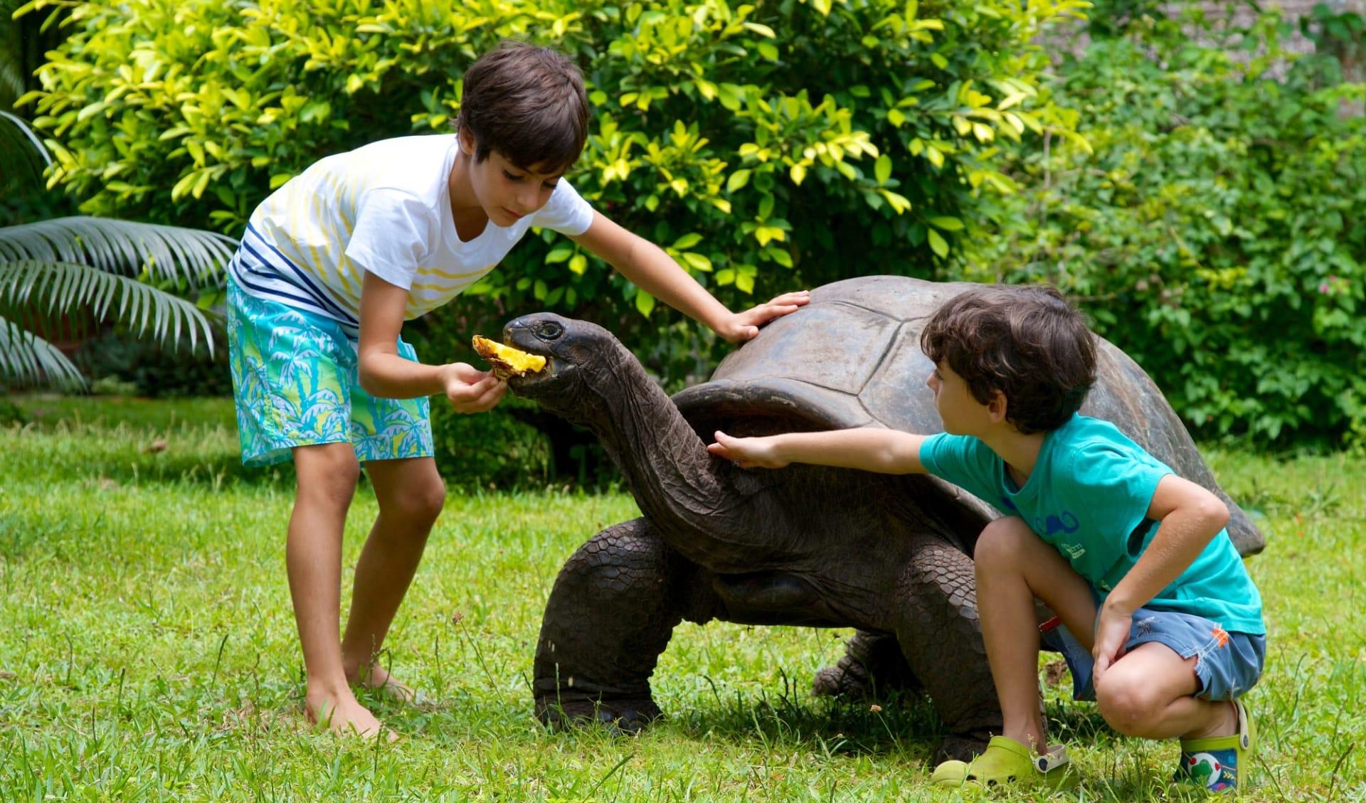 Les Villas d'Or in Praslin:  Turtle feeding