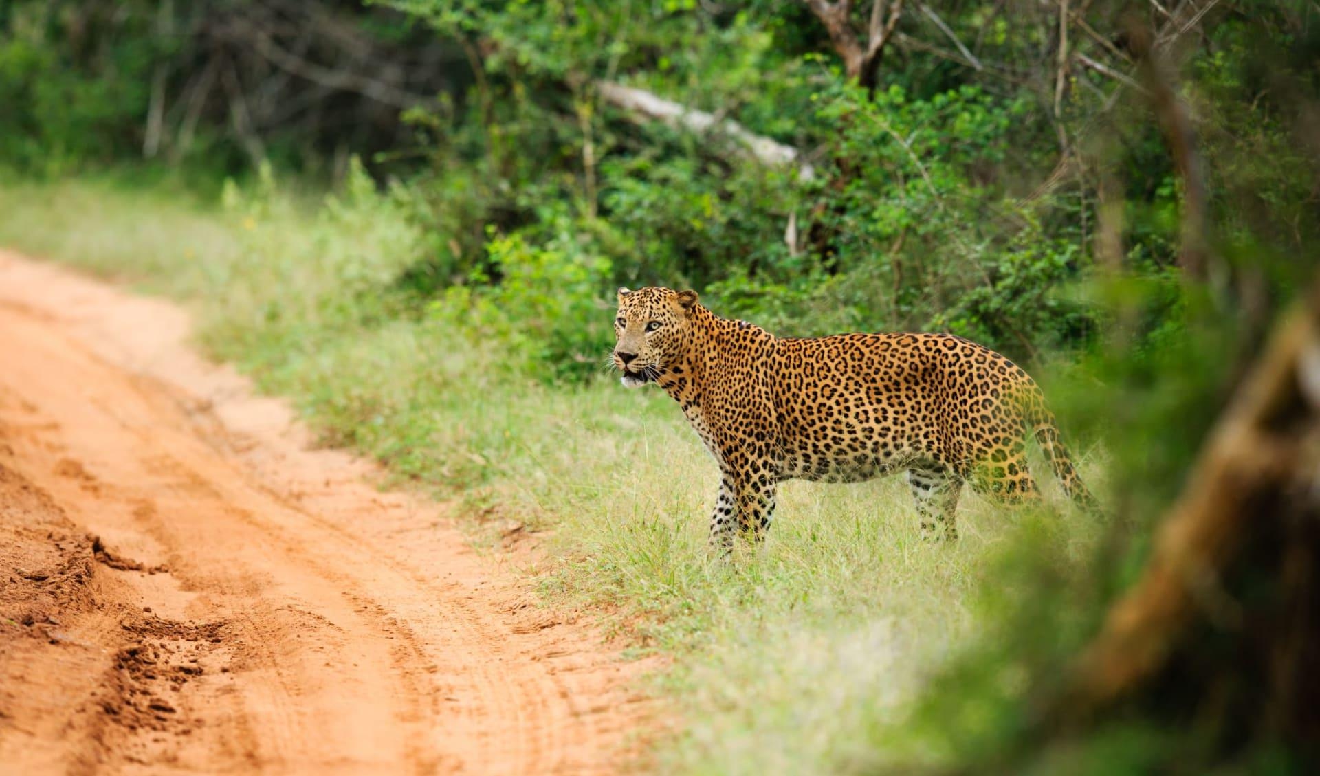 Yala Nationalpark Safari - Chena Huts - 2 Tage ab Colombo: activities: Yala NP