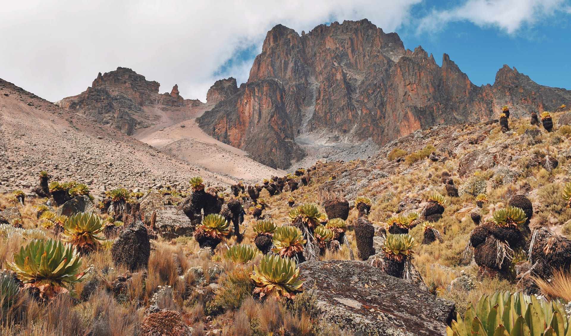 Mount Kenya und Ol Pejeta, Kenia
