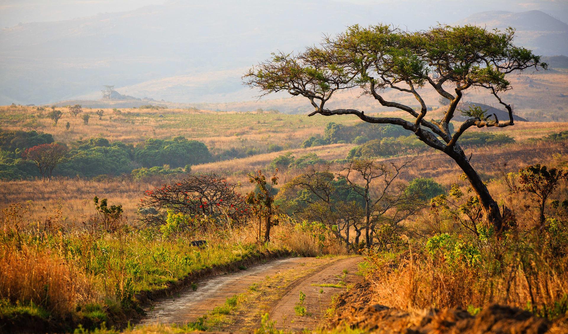 Nyika National Park, Malawi