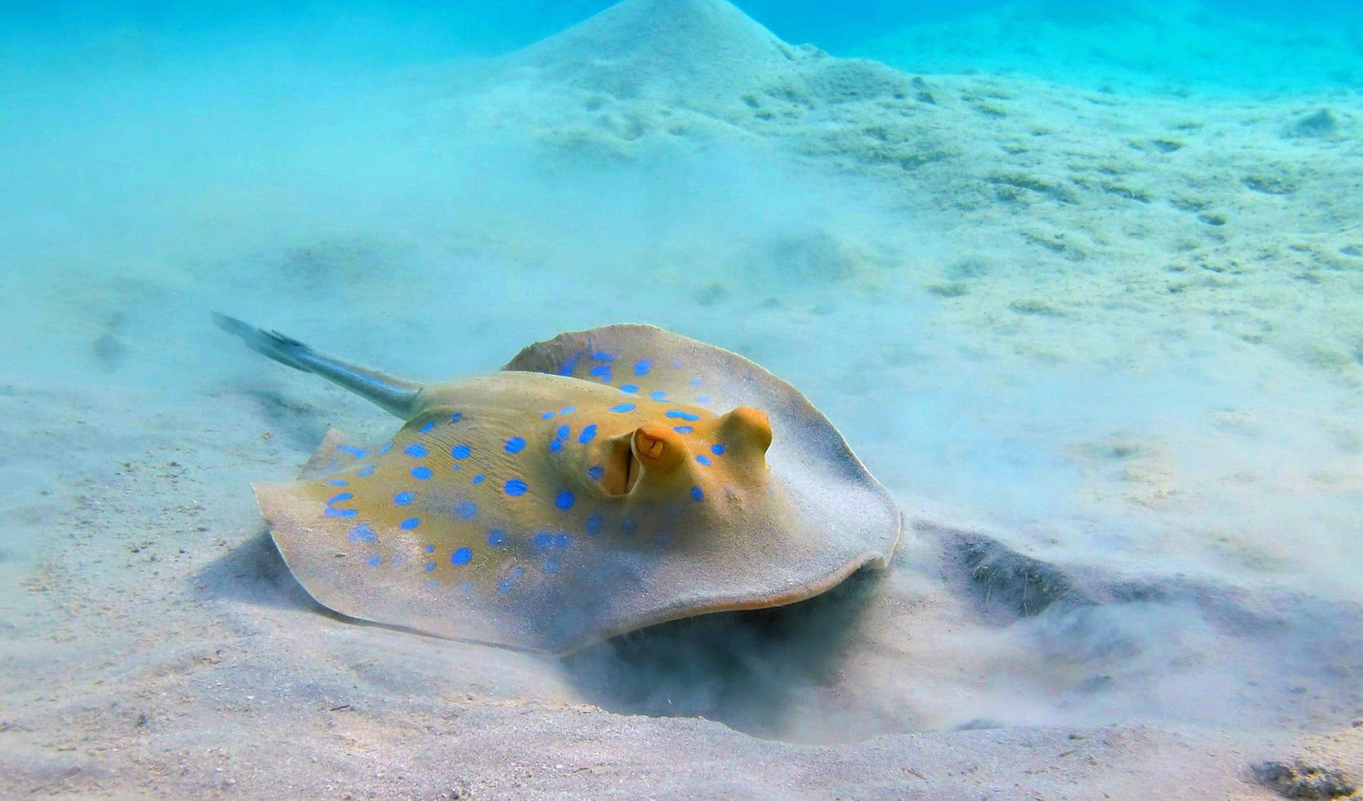 Sting Ray, Mosambik