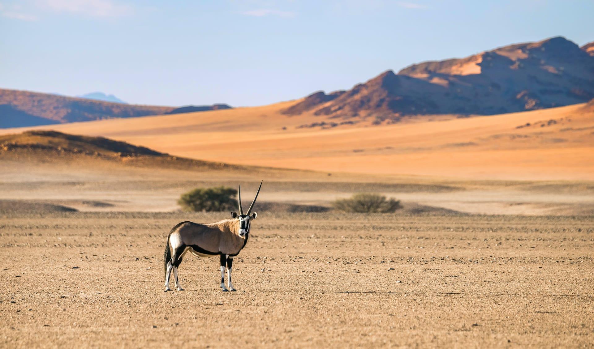 Namib Naukluft , Namibia