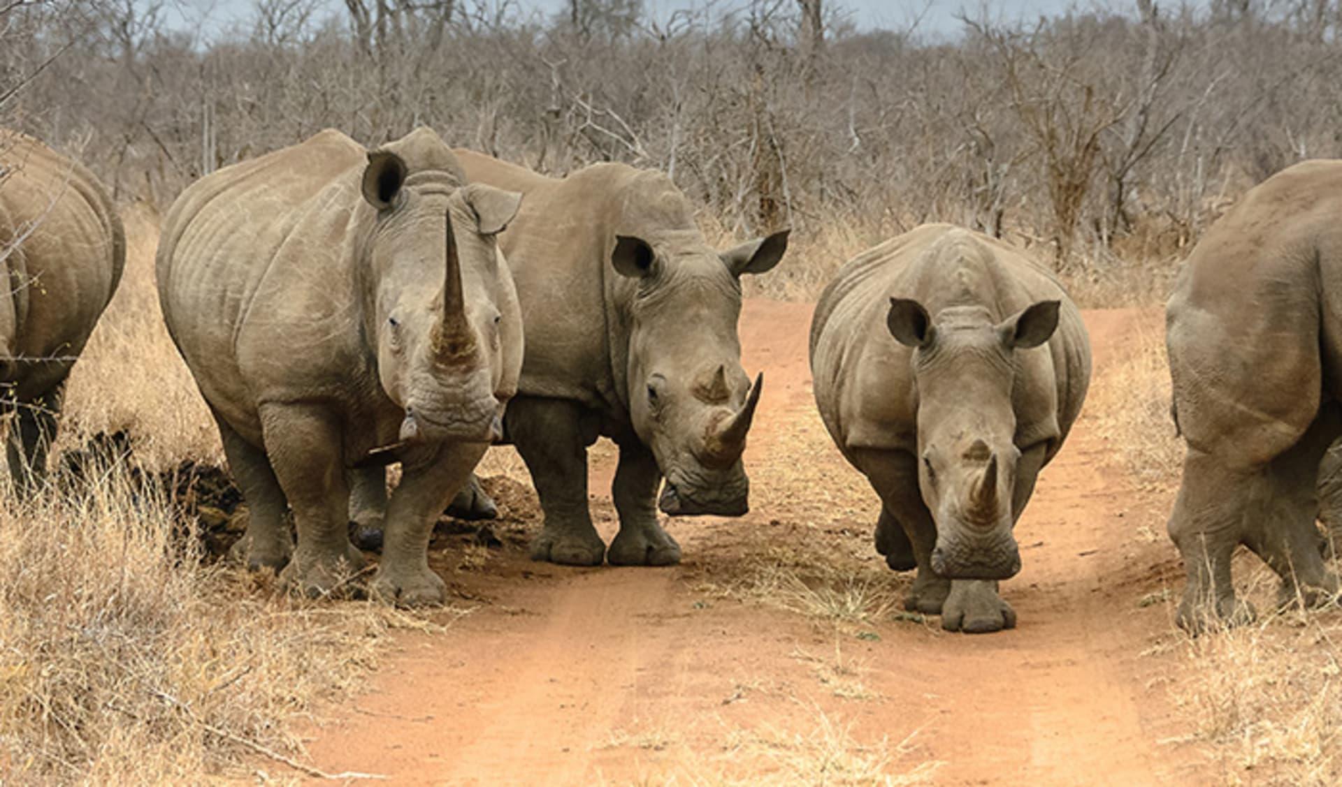 Hluhluwe iMfolozi Game Reserve, Südafrika