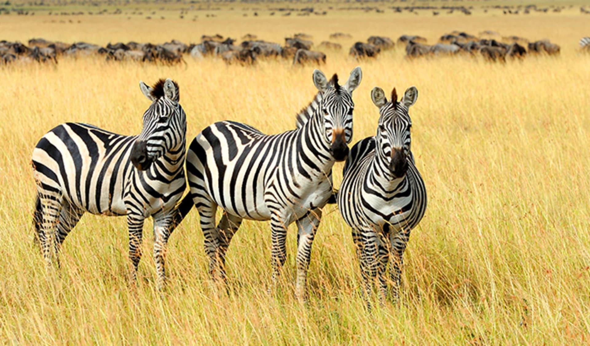 Kwandwe Private Game Reserve, Südafrika