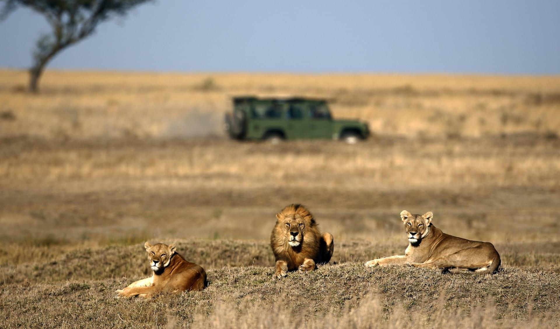 Savanne, Südafrika