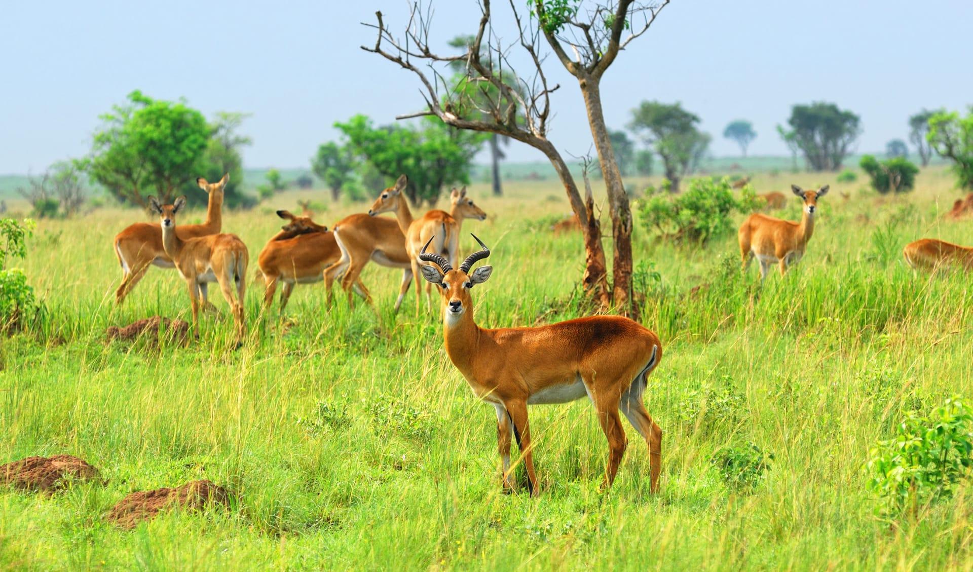 Nationalpark Uganda, Uganda