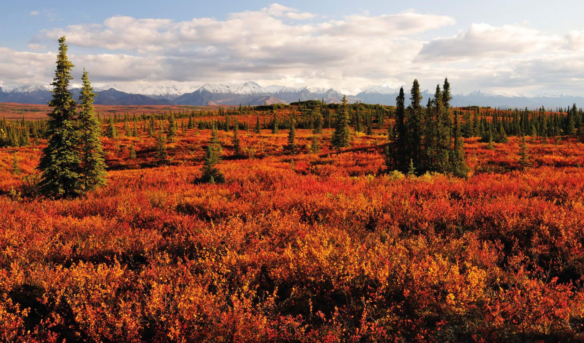 Zauberhaftes Alaska & Yukon ab Anchorage: Alaska - Denali Nationalpark - Farbige Herbsttundra mit der Alaska Range