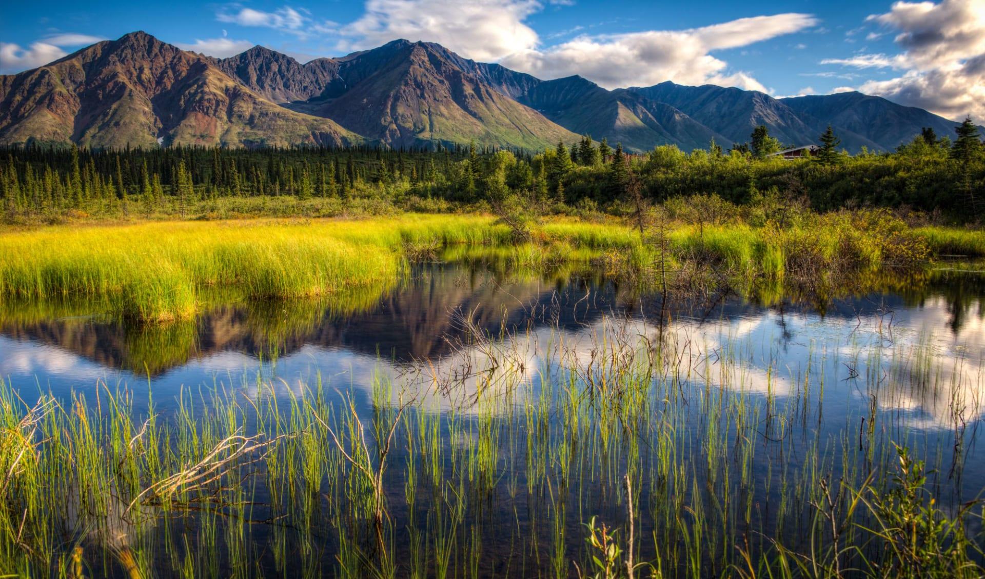 Naturwunder Alaskas ab Anchorage: Alaska - Denali NP - Bergkette