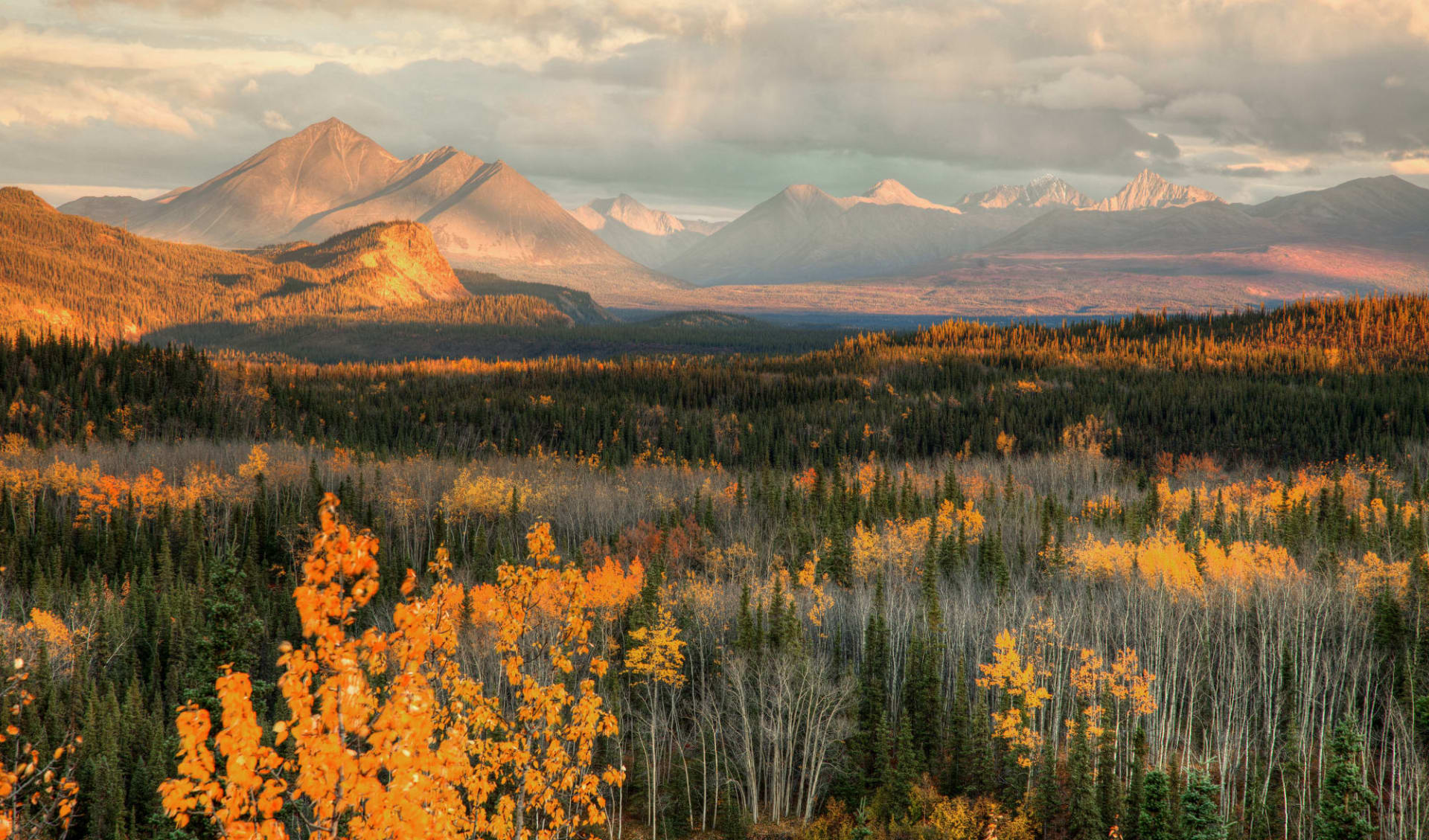 Best of Yukon und Alaska ab Anchorage: Alaska - Denali NP - Bergpanorama