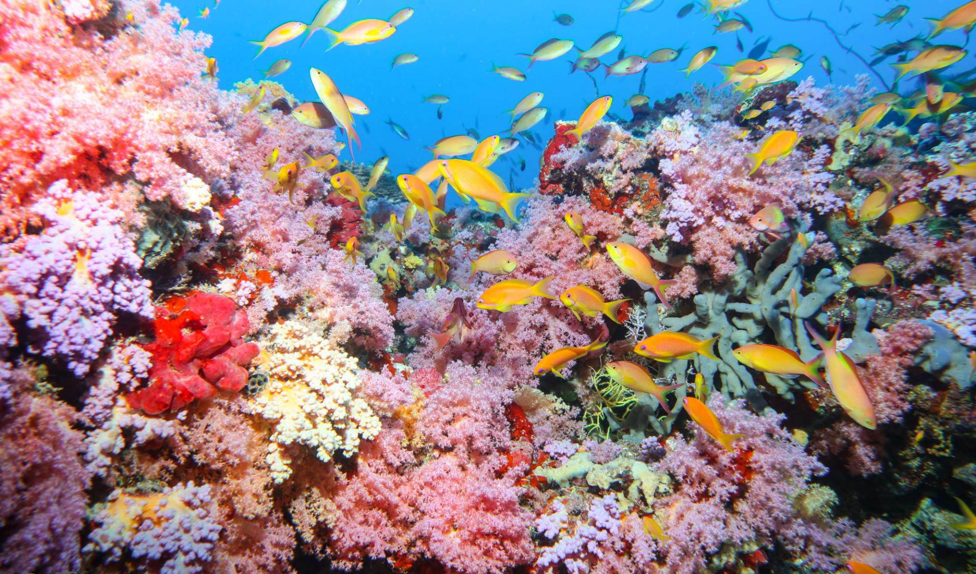 Amba ab Haa-Dhaalu-Atoll: Amba