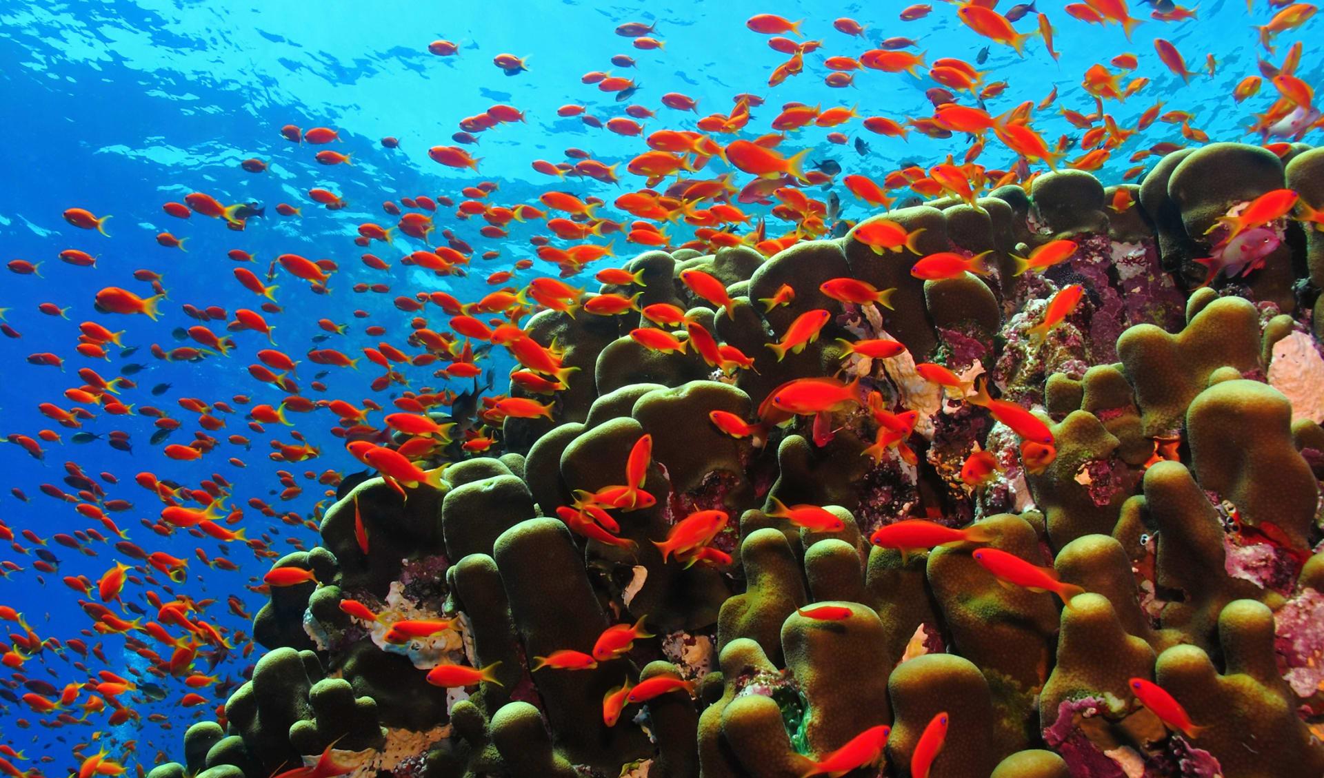 Unterwassertiere, Oman