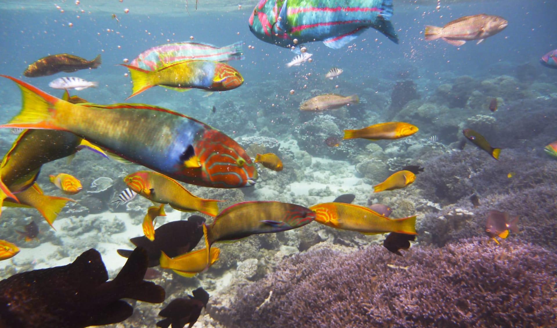 Arajilla Retreat in Lord Howe Island: Arajilla Resort 380103886