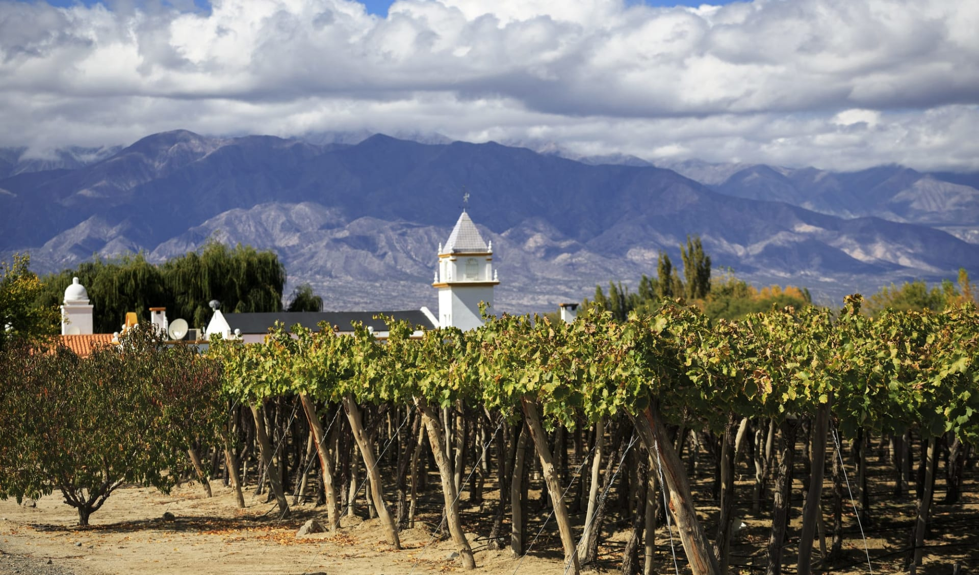 Salta - Salta: Argentinien - Cafayate - Vineyard