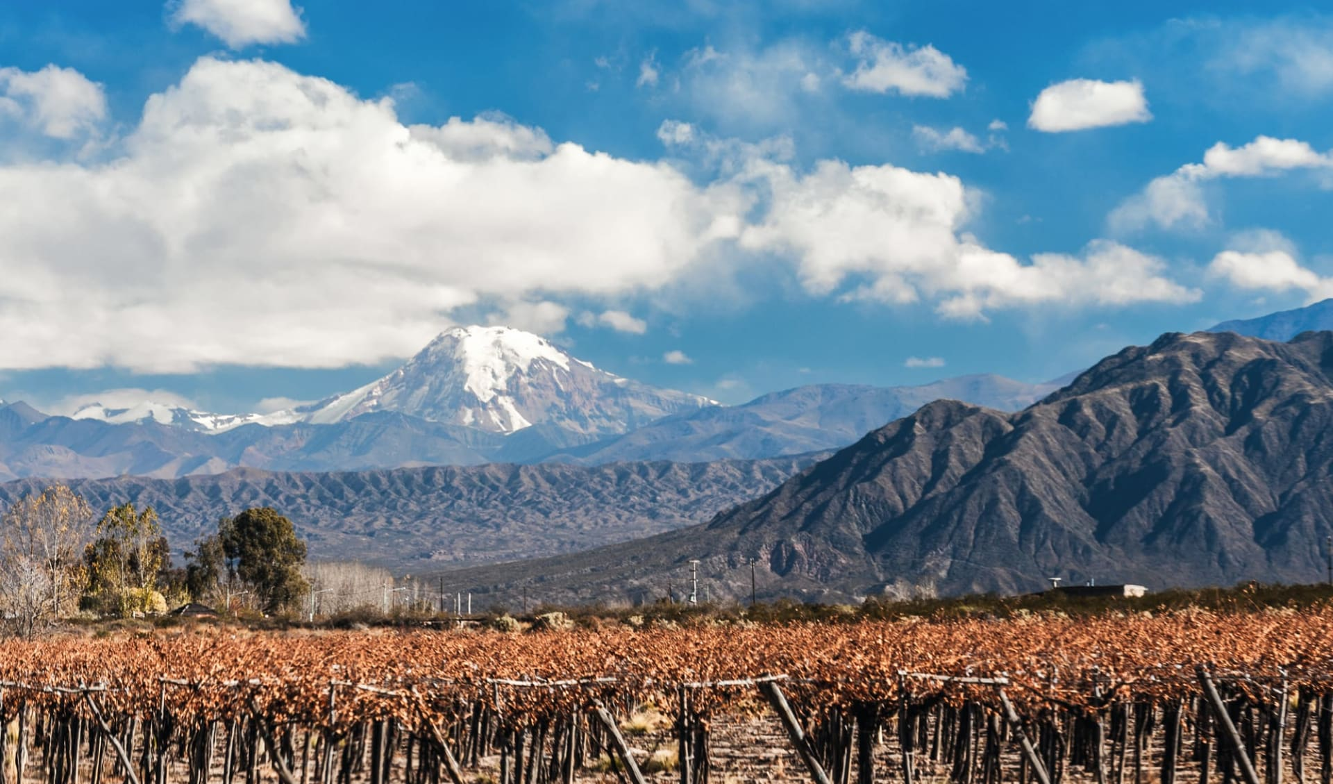 Gruppenreise El Norte Unico ab Salta: Argentinien - Mendoza - Volcano Aconcagua und Weinreben