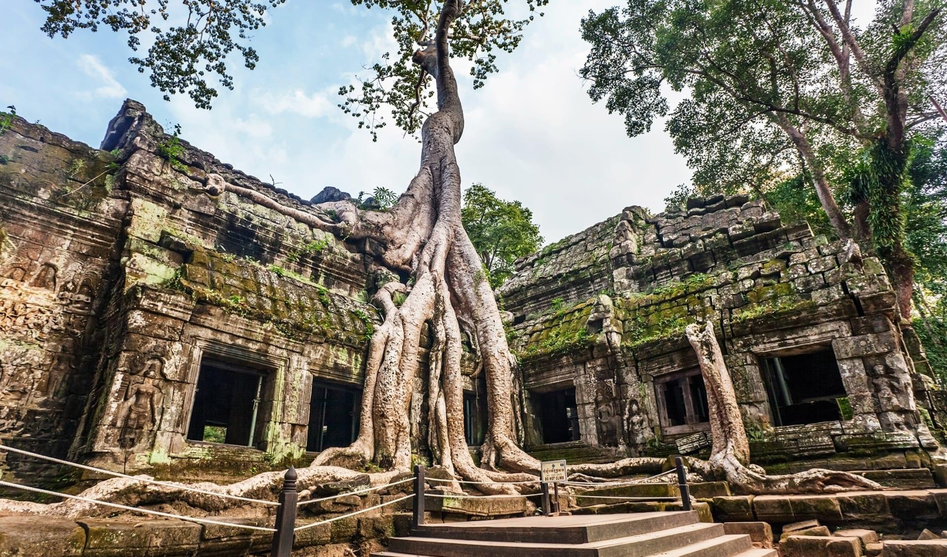 Ta Prohm Tempel, Angkor, Kambodscha