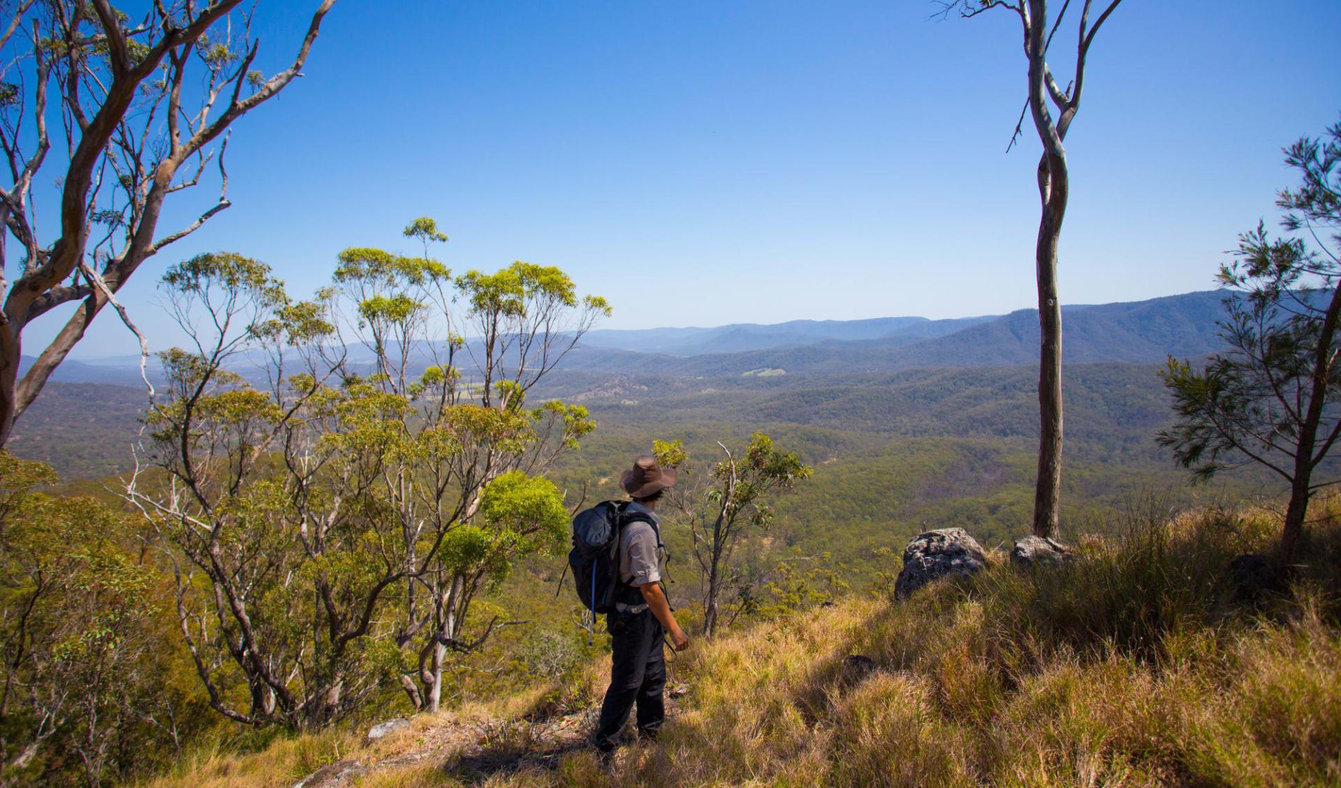 Scenic Rim Trail ab Brisbane: Australia - Queensland - Scenic Rim Trail - Bergwanderer