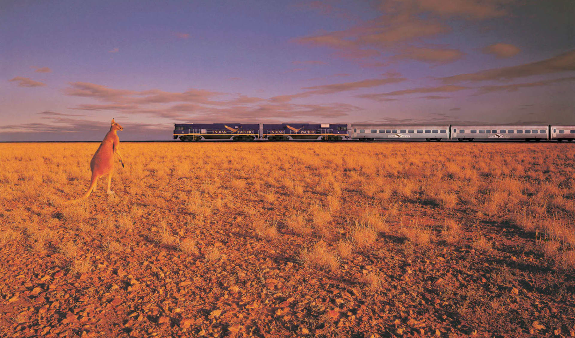 Indian Pacific von Adelaide nach Perth: Australien - Bahnreisen - Indian Pacific mit Känguruh