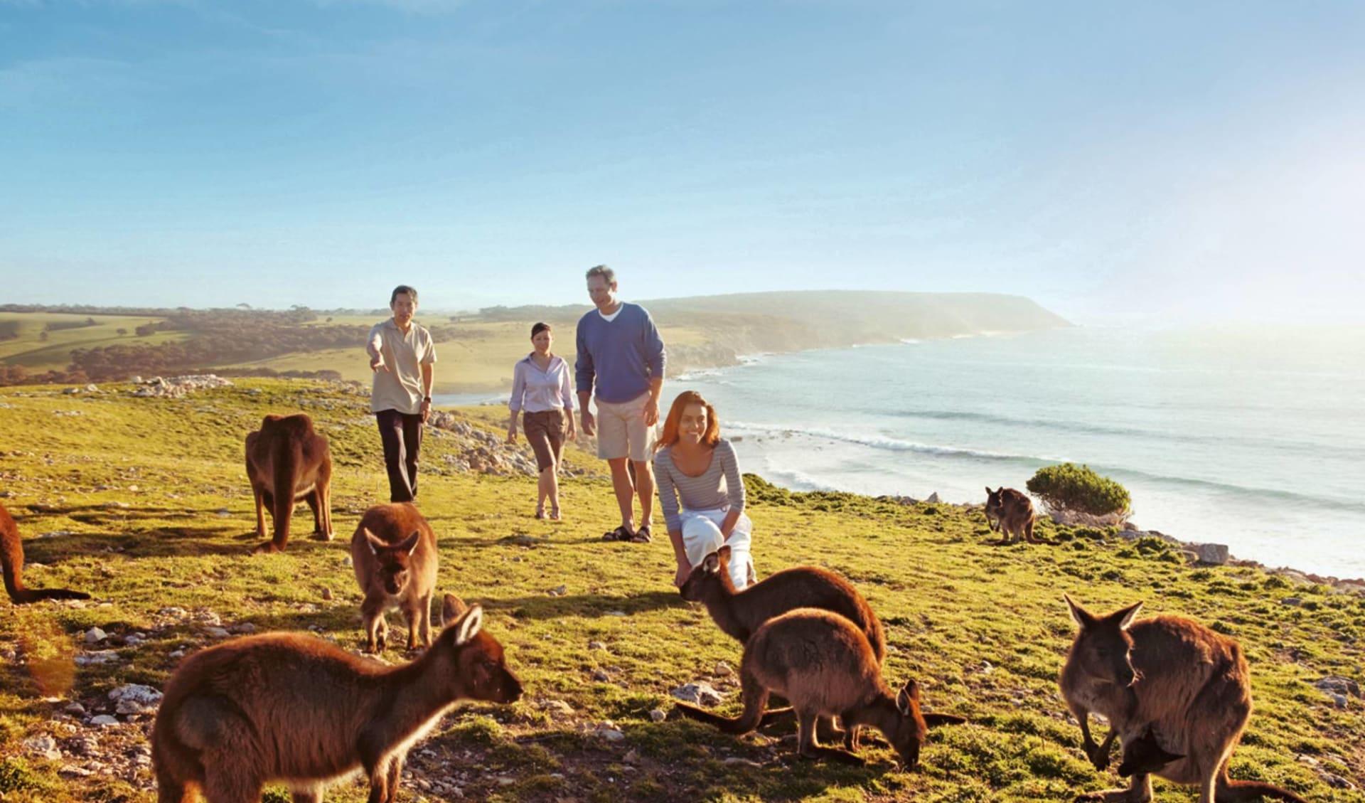 Kangaroo Island Adventure Tour ab Adelaide: Australien - Kangaroo Island - Familie mit Kangaroos