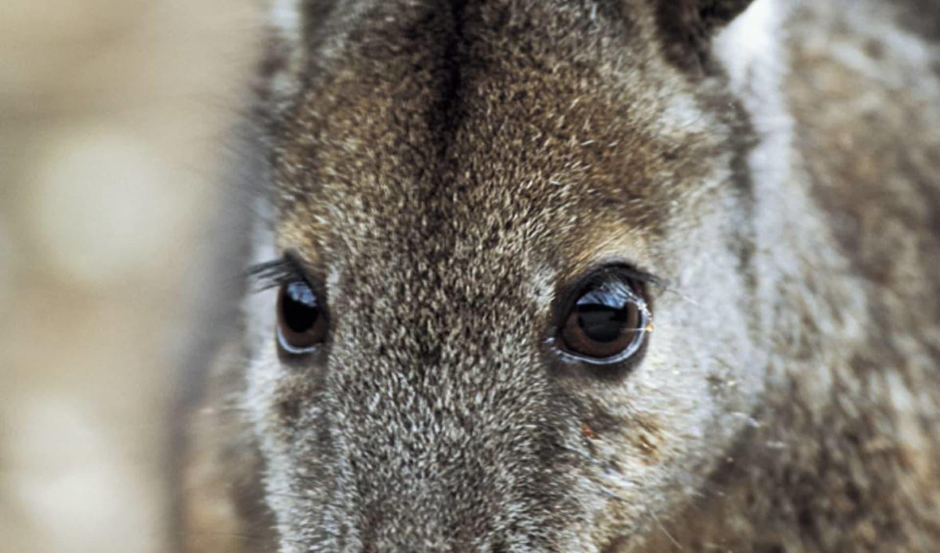 Nature Tour ab Adelaide: Australien - Kangaroo Island - Kangaroo