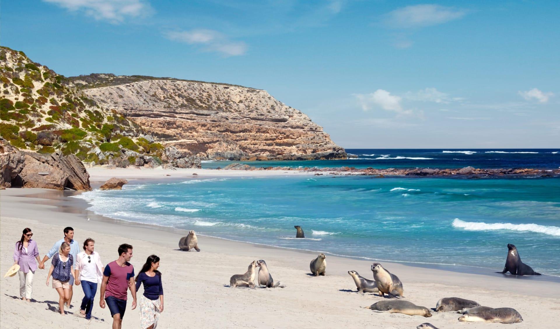 Kangaroo Island Adventure Tour ab Adelaide: Australien - Kangaroo Island - Robben - Copyright South Australia Tourism - Photographer Paul Torcello