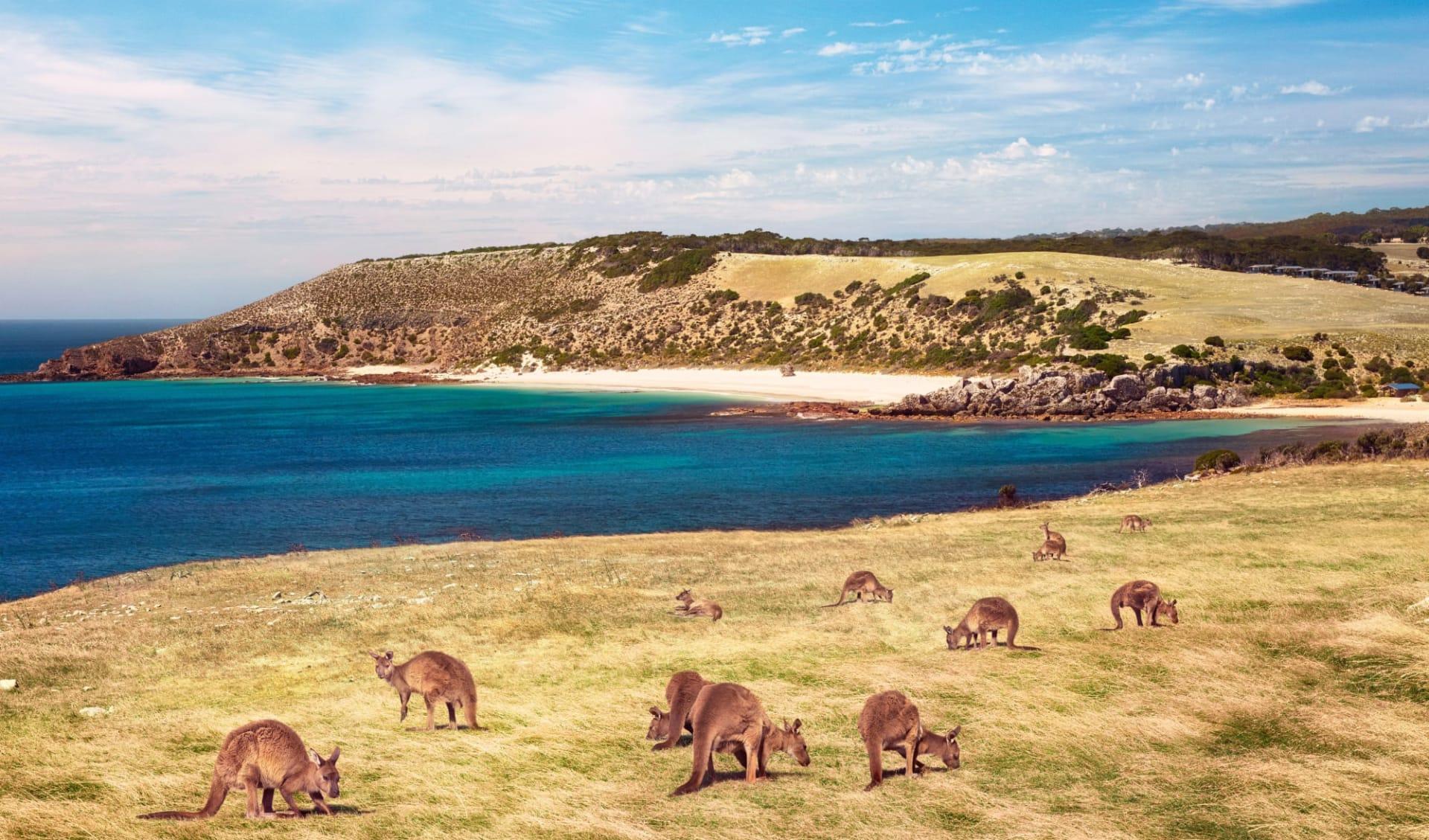 Explorer Tour ab Adelaide: Kangaroo Island