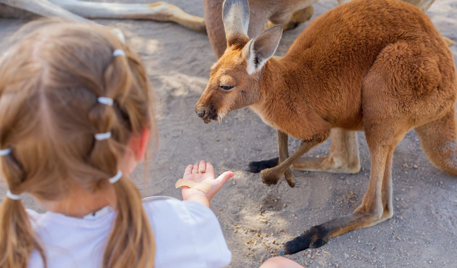 Reisen mit Kindern, Tarango Zoo, Australien