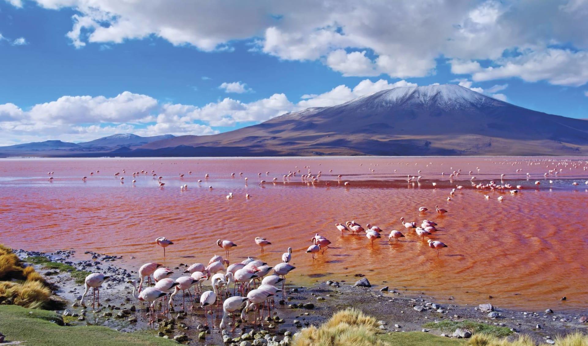 Gruppenreise Imperio Inca ab Lima: Bolivien - Uyuni - Flamingos im Laguna Colorada