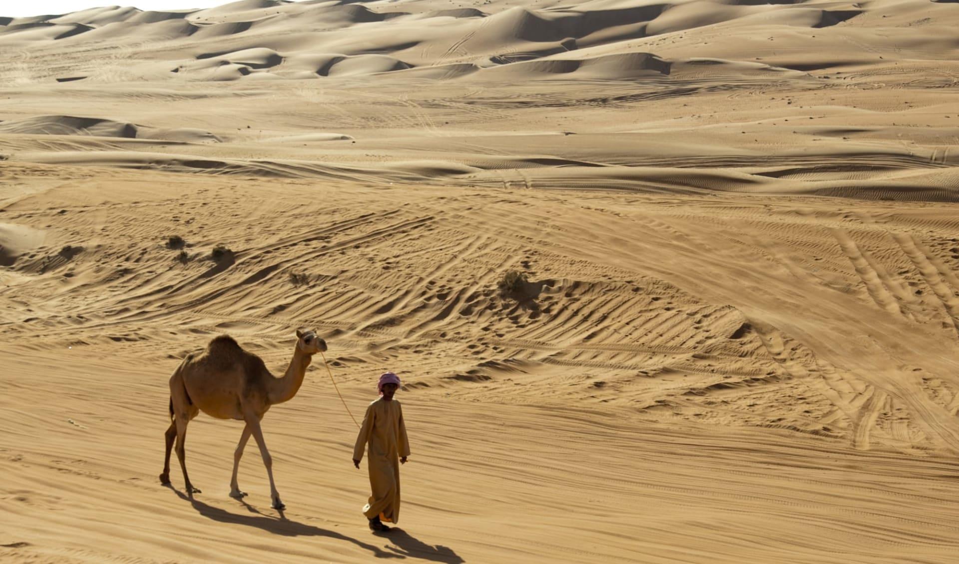 Auf den Spuren der alten Weihrauchroute ab Salalah: Camel in the desert