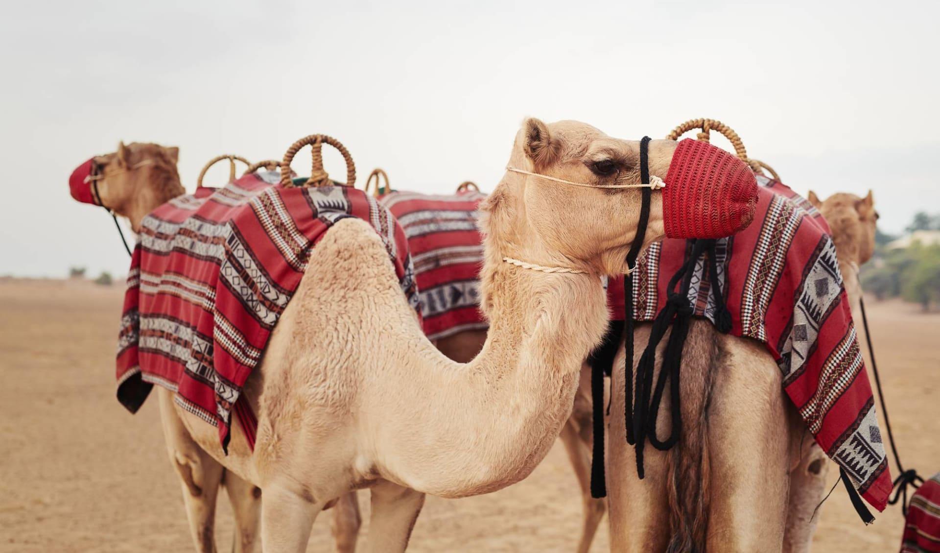 Al Maha Desert Resort & Spa: