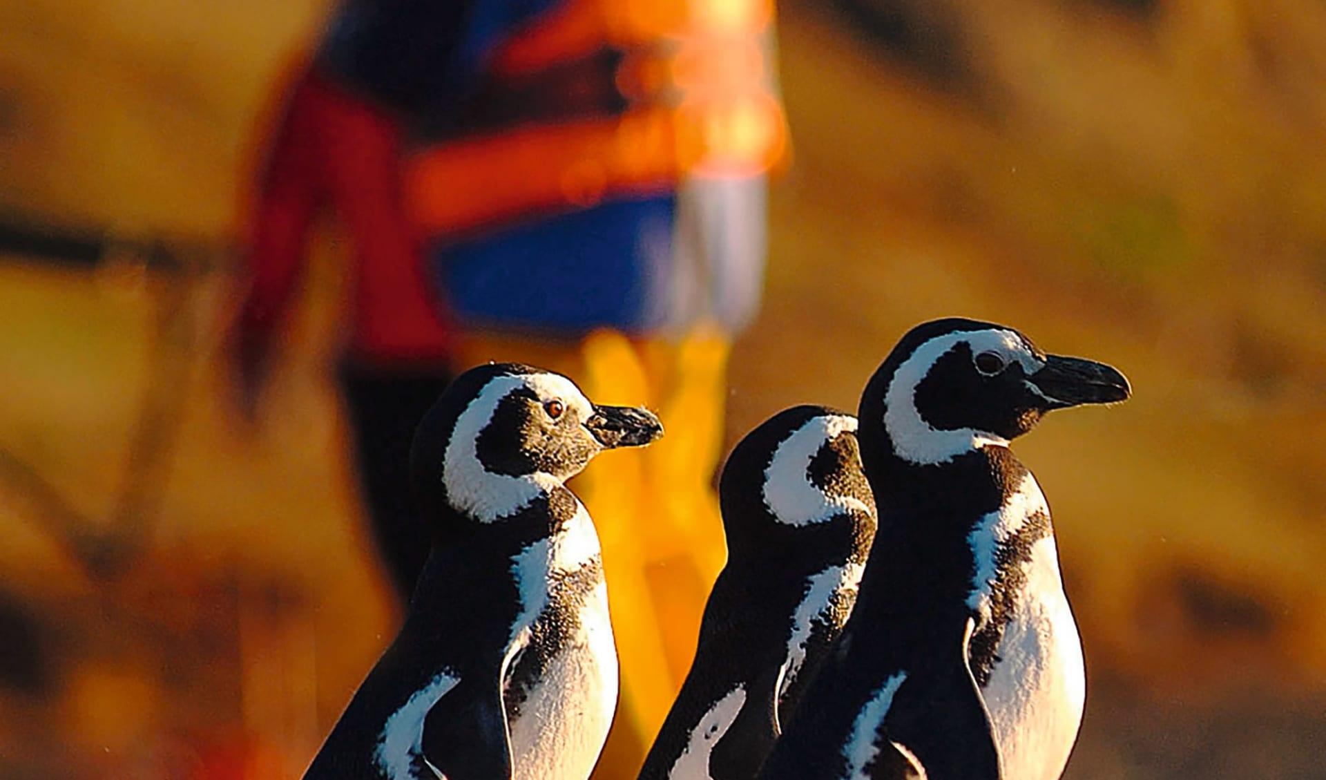 Der kleine Norden ab La Serena: Chile - Pinguine