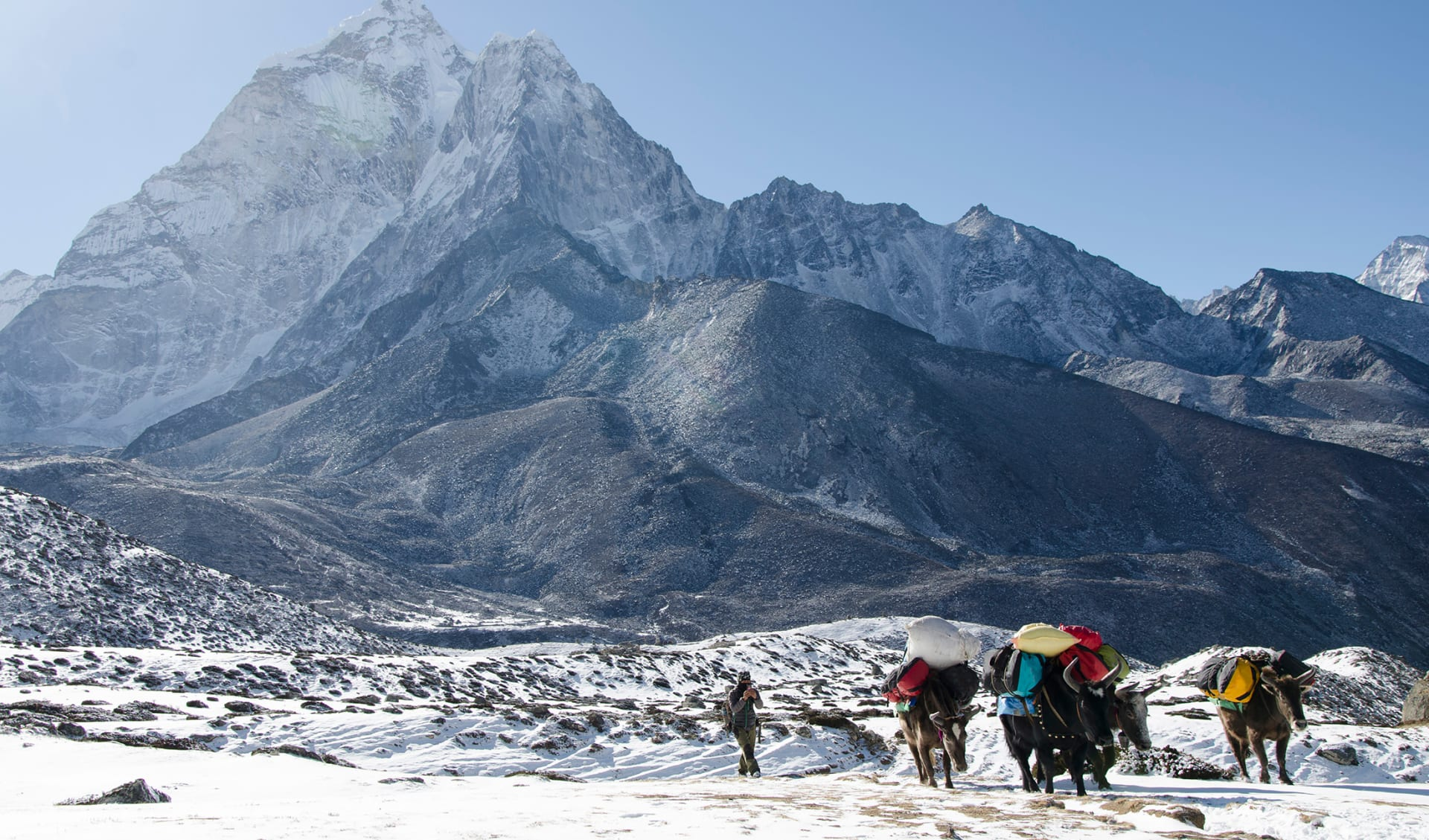 Yak-Trekking, Himalaya, Tibet