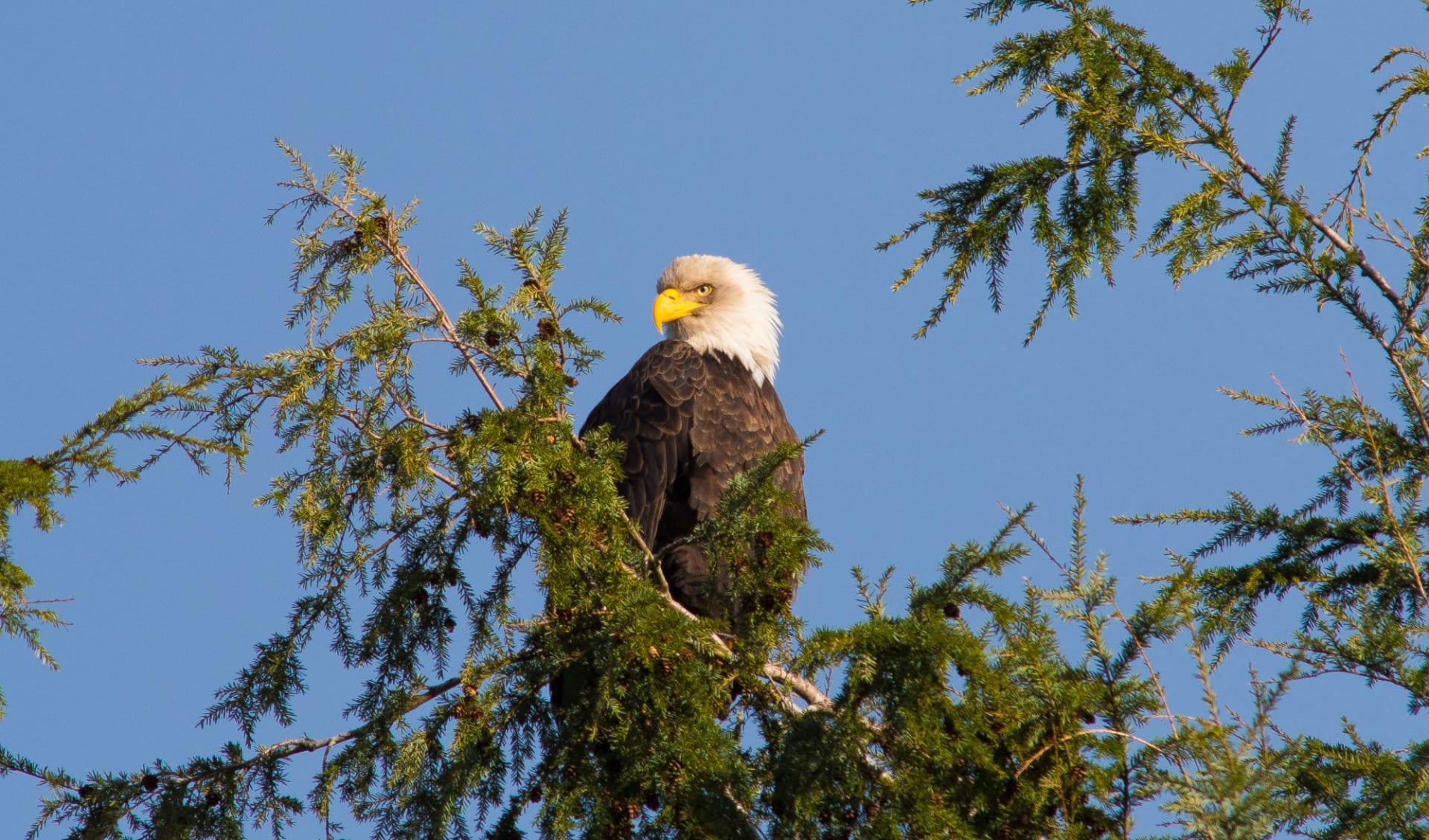 Coastal Rainforest Safari 5 Tage ab Port Hardy: Coastal Safaris_SeaWolf_Eagle