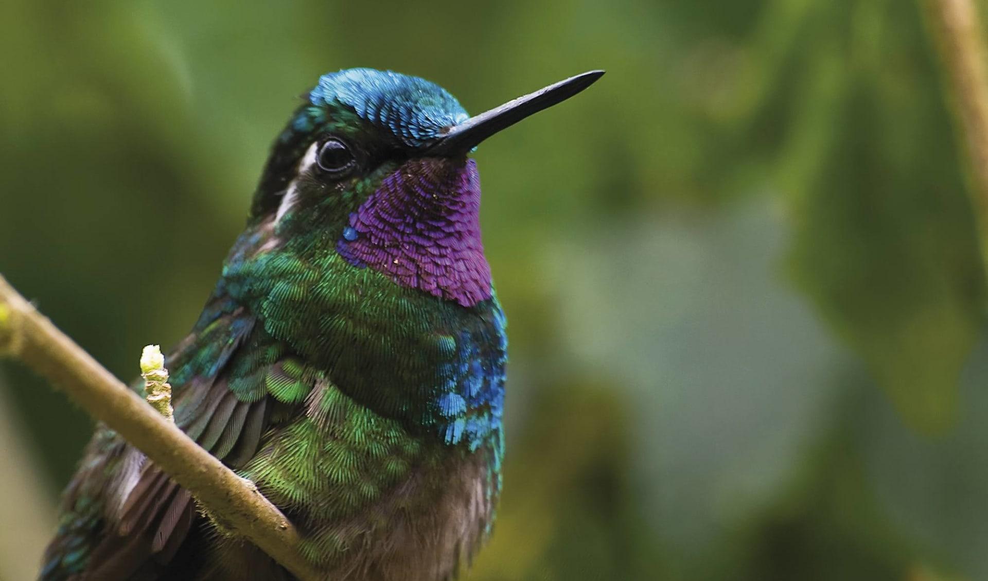 Gruppenreise Costa Rica Pazifiktour ab San José City: Costa Rica - Pazifik - Vogel