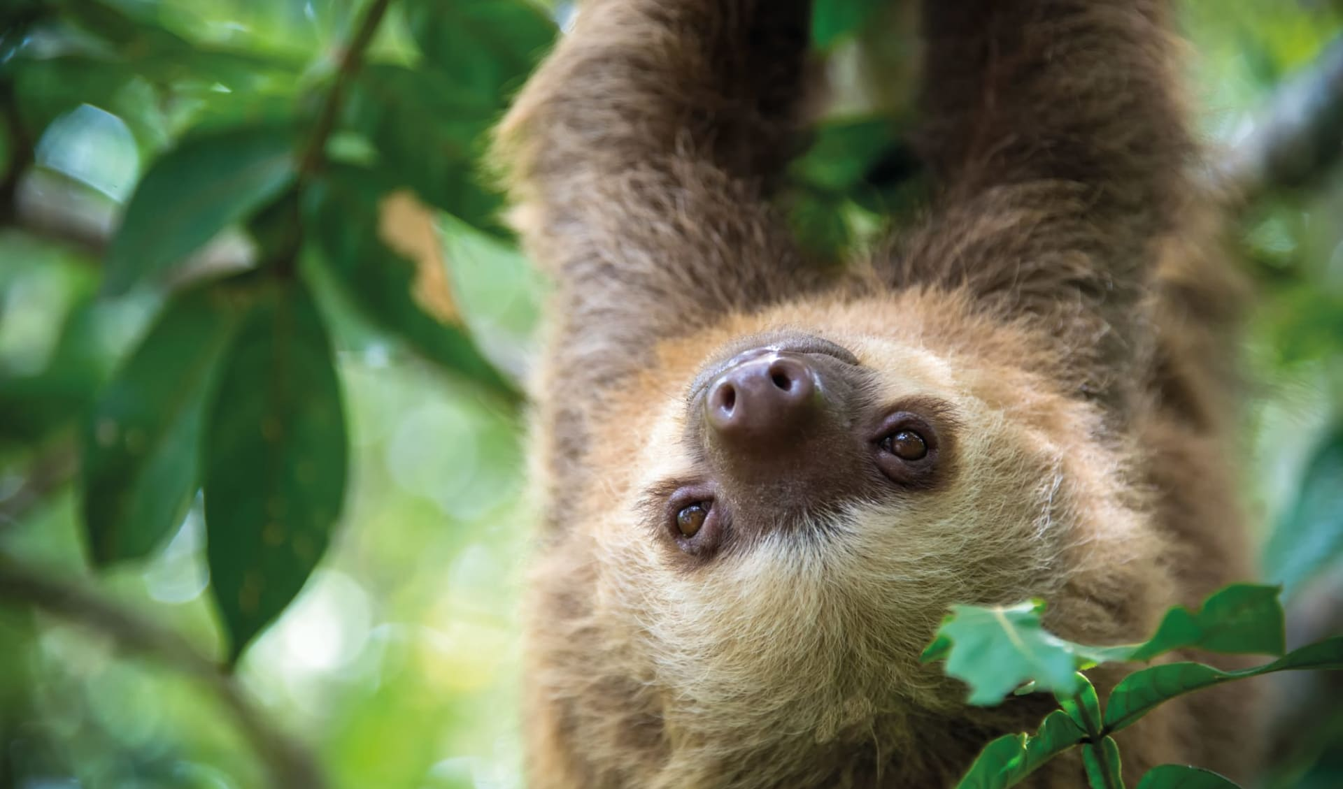 Privatreise Costa Rica Pazifiktour ab San José City: Costa Rica - Regenwald - Faultier