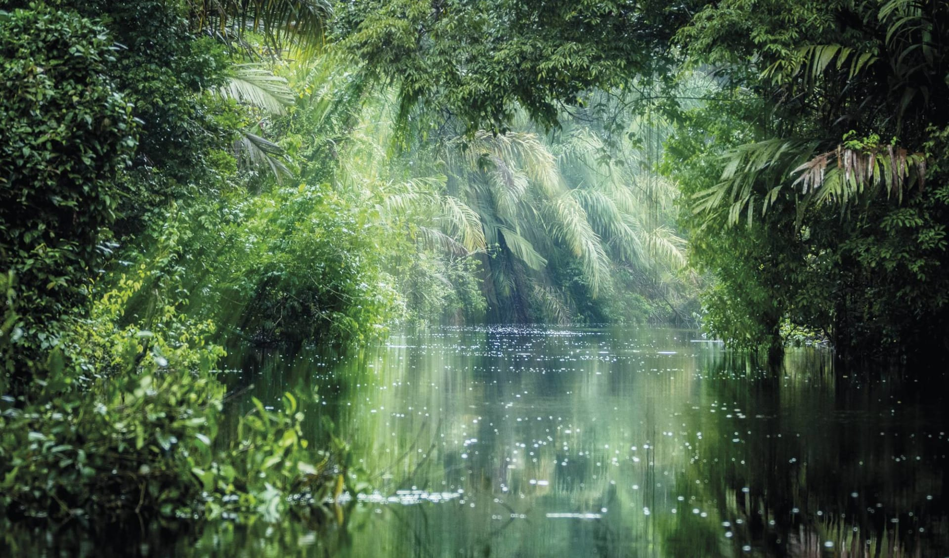 Privatreise Karibik mal anders ab San José City: Costa Rica - Tortuguero Nationalpark - Regenwald