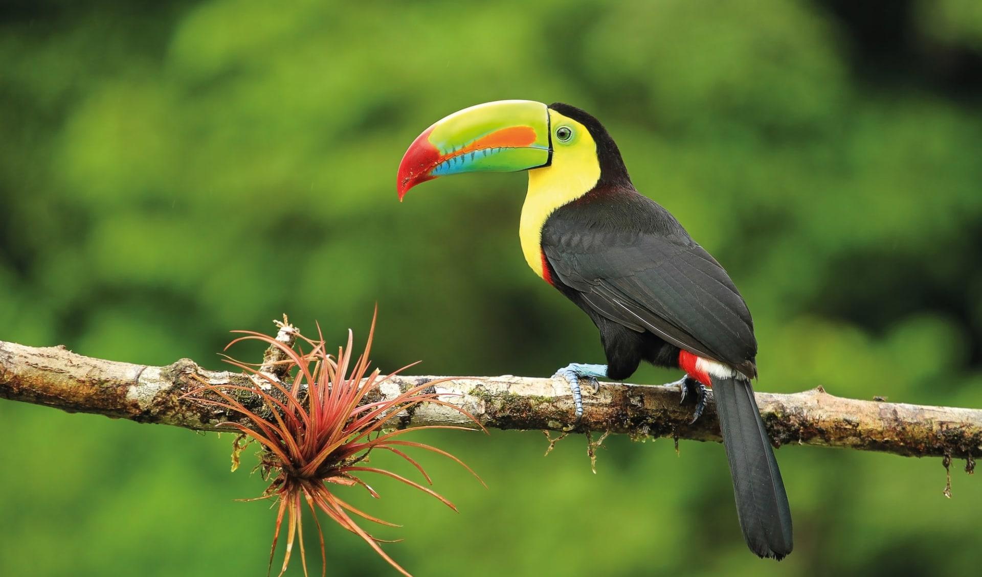 Privatreise Mundo Verde ab San José City: Costa Rica - Tukan