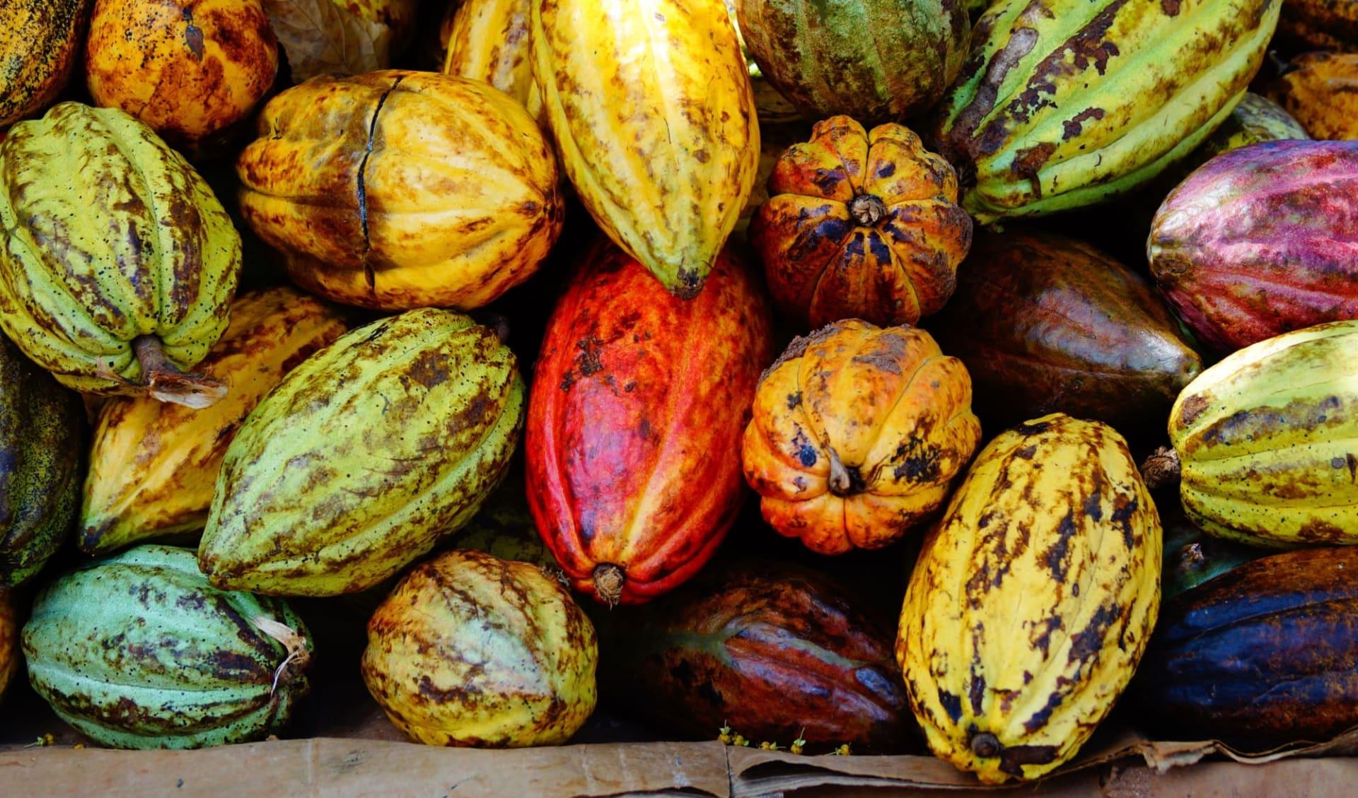 Höhepunkte Dominikanische Republik ab Santo Domingo: Dominikanische Republik - Früchte - Nahaufnahme