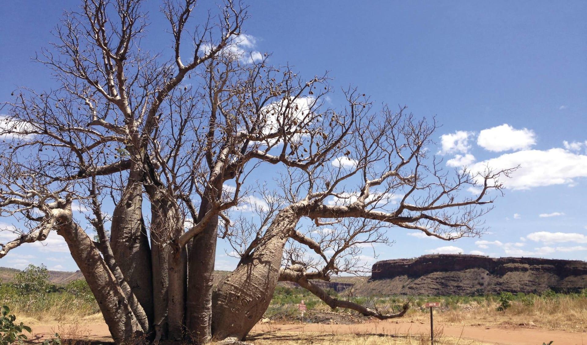 Kimberley Complete ab Broome: El Questro Wilderness Park