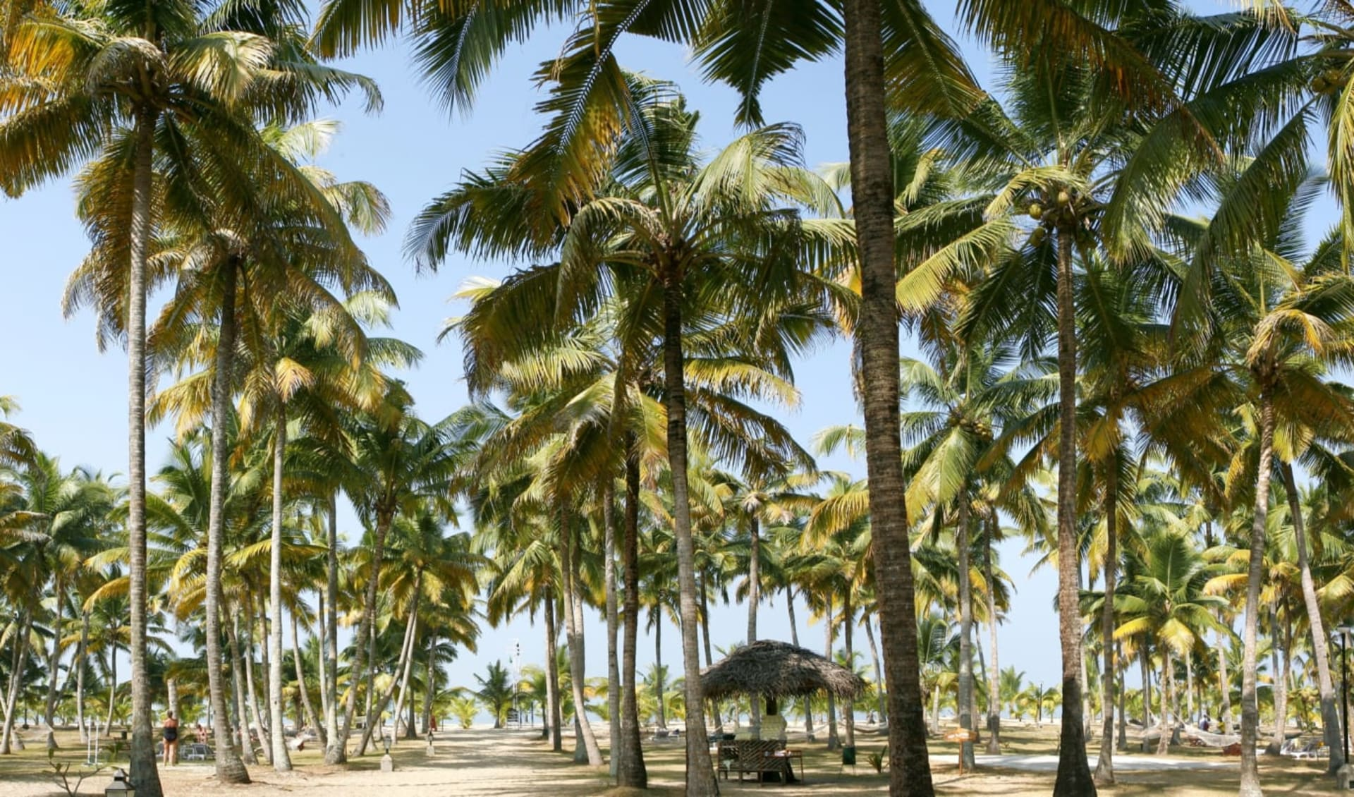 Marari Beach Resort in Mararikulam: Garden Marari Beach Resort