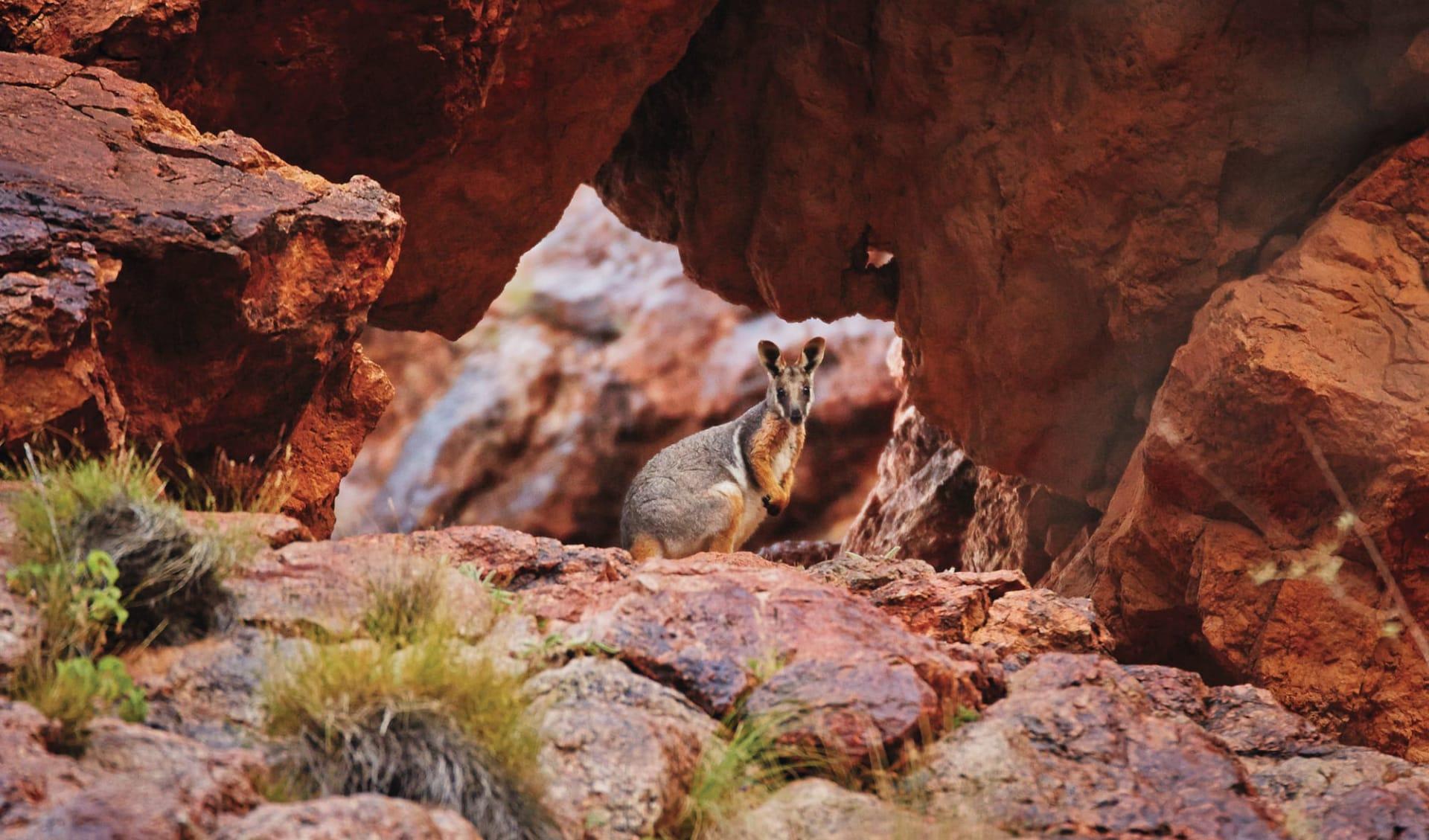 Outback und Kangaroo Island ab Adelaide: Flinders Ranges