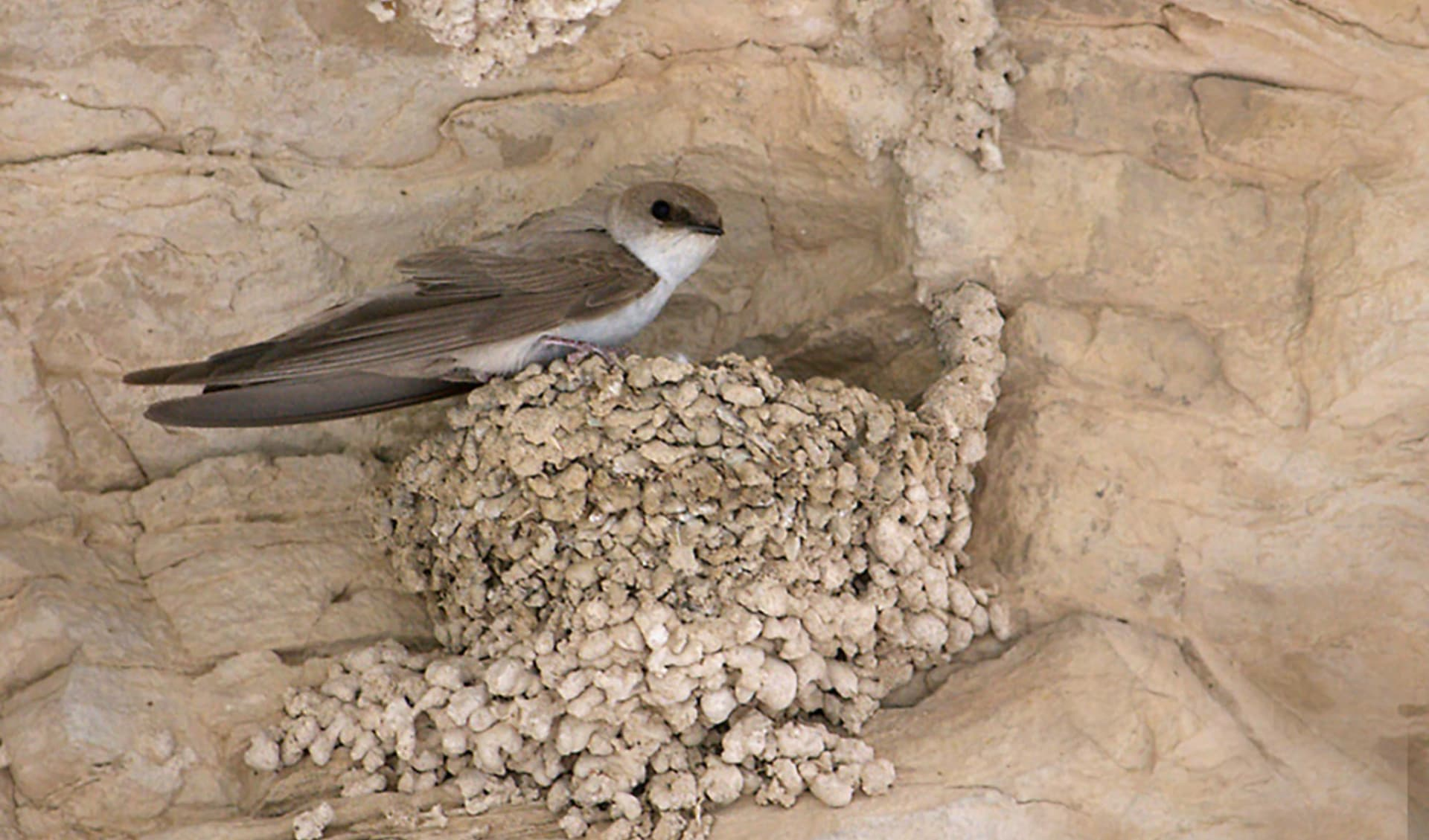 Vogelbeobachtungstour Iran ab Teheran: Flora_IRN_3