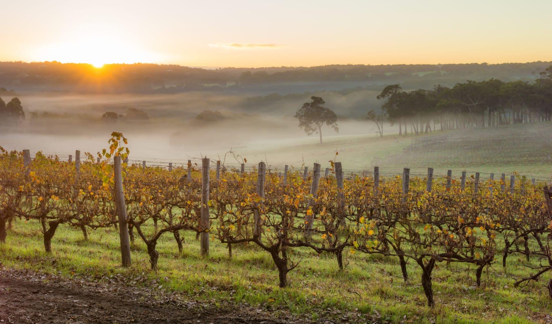 Go Wild ab Perth: Frühling in den Weinbergen