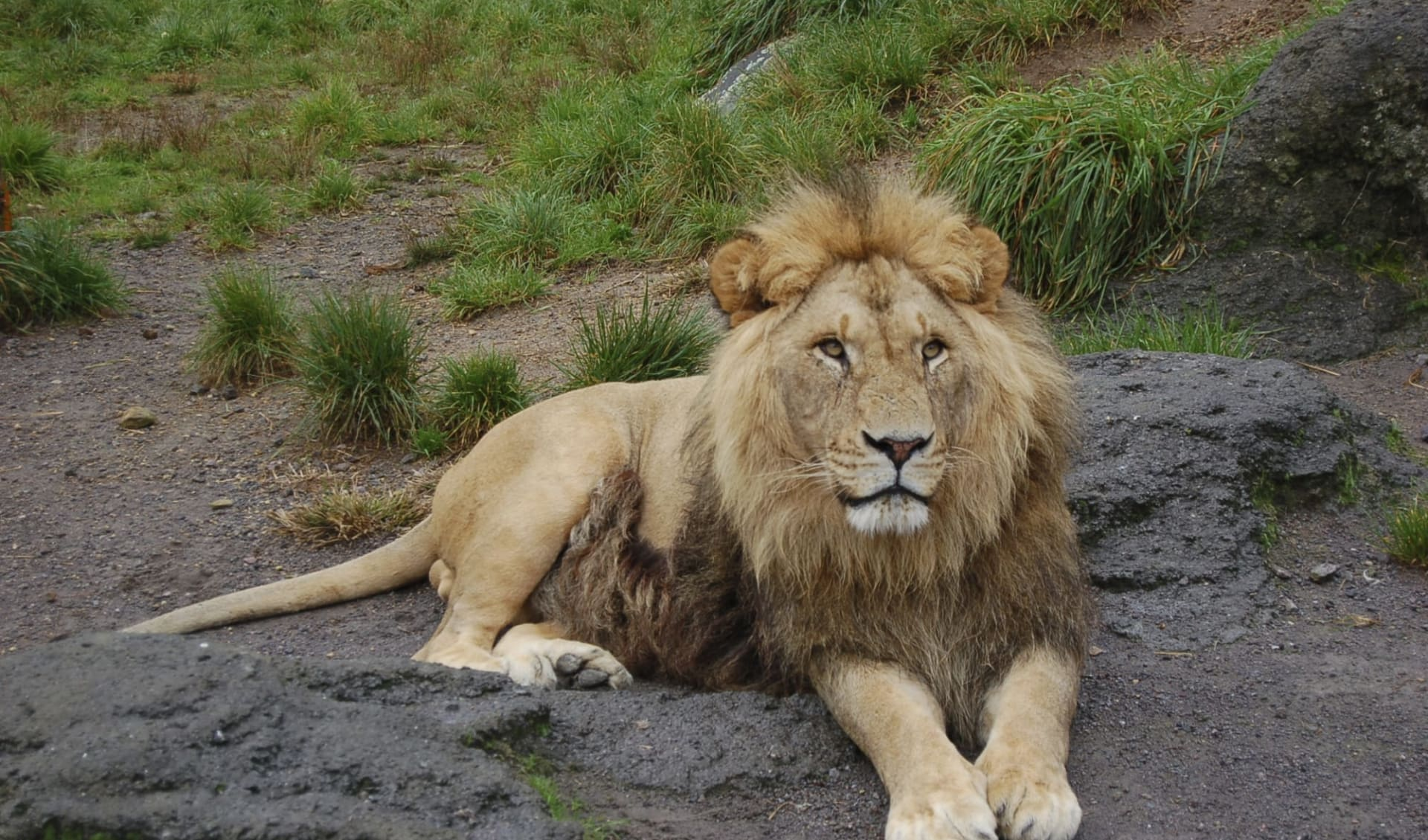 Unbekanntes Gujarat ab Ahmedabad: Gir Nationalpark: Lion