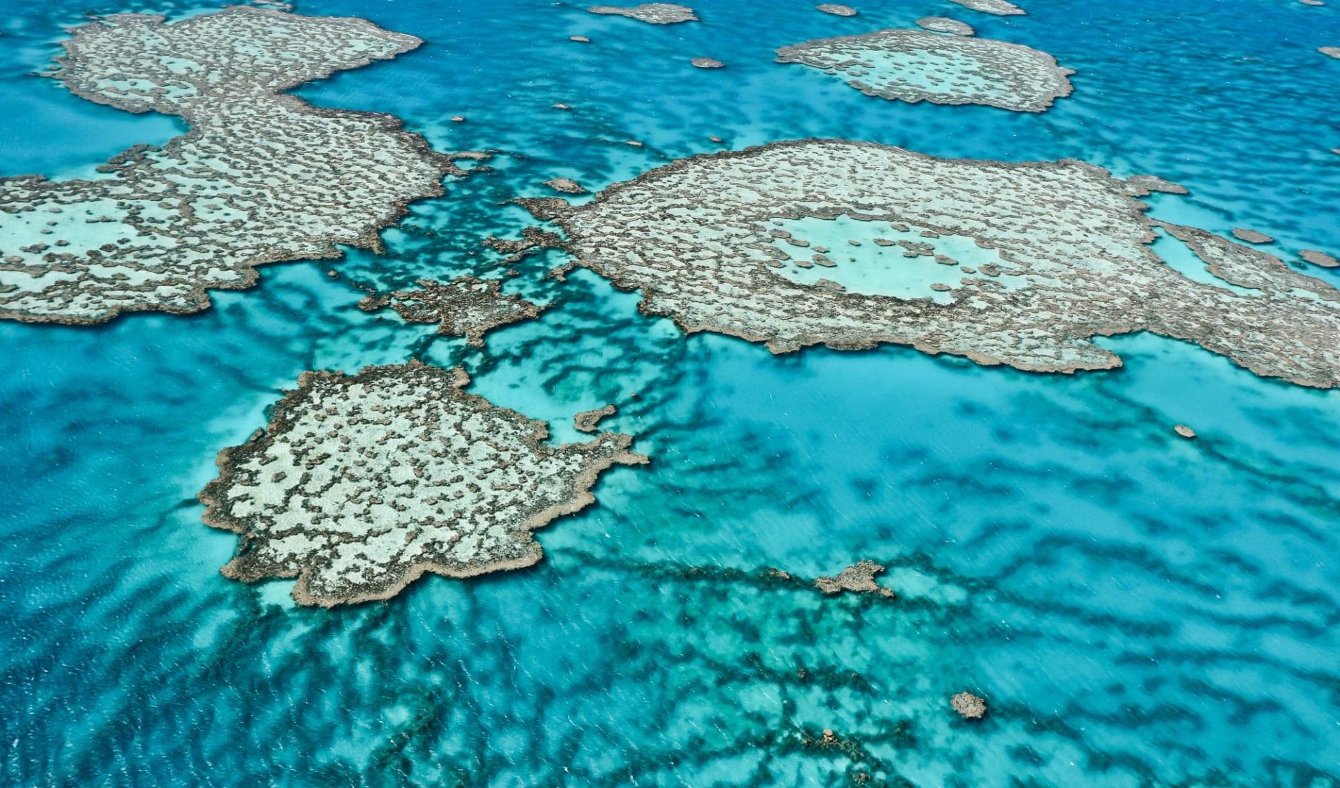 East Coast Encompassed ab Sydney: Great Barrier Reef