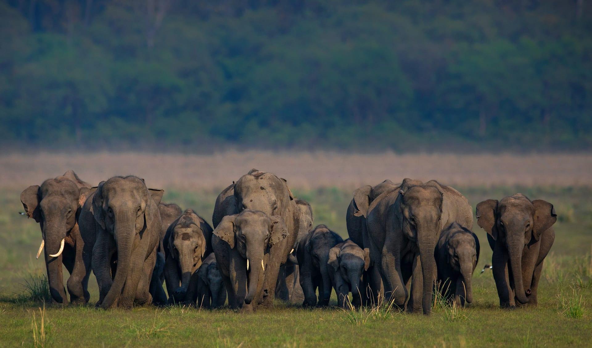 Elephants, Indien