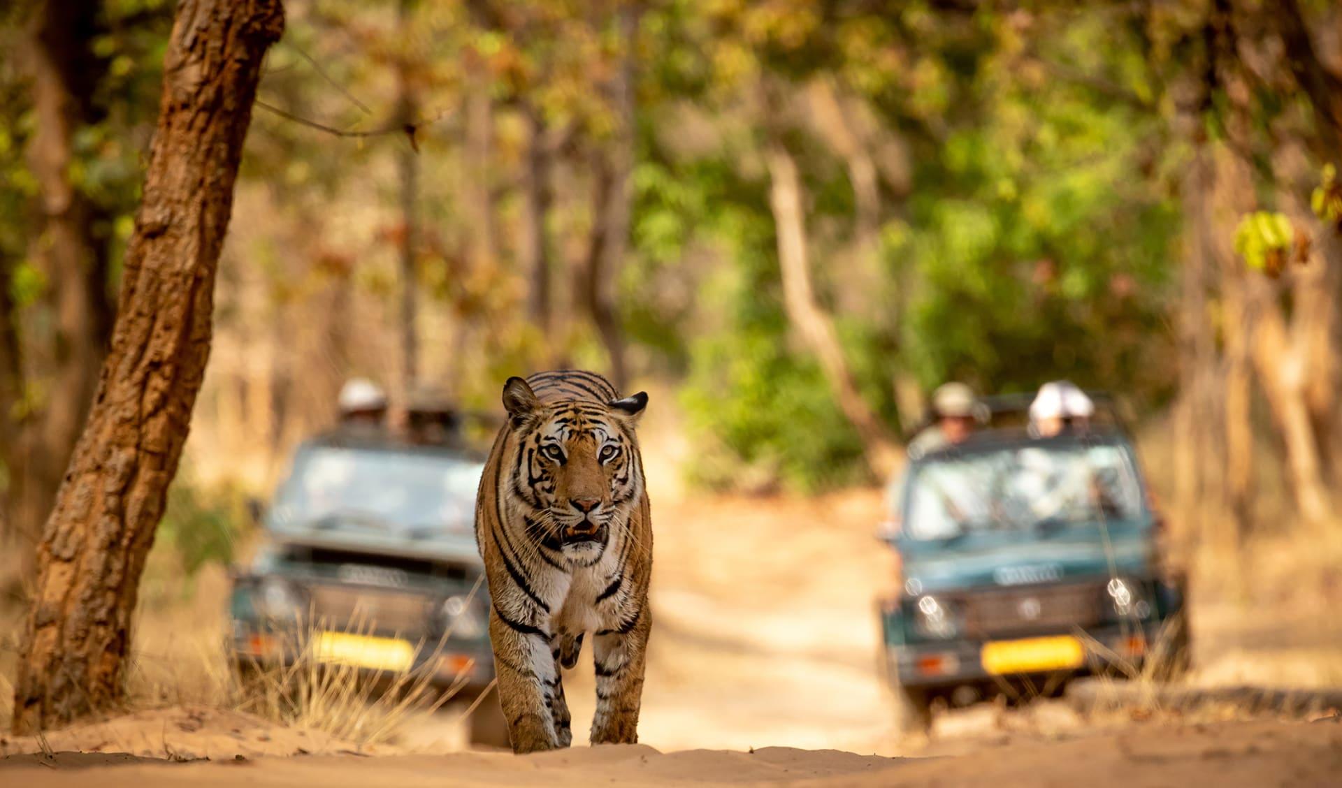 Safari, Indien